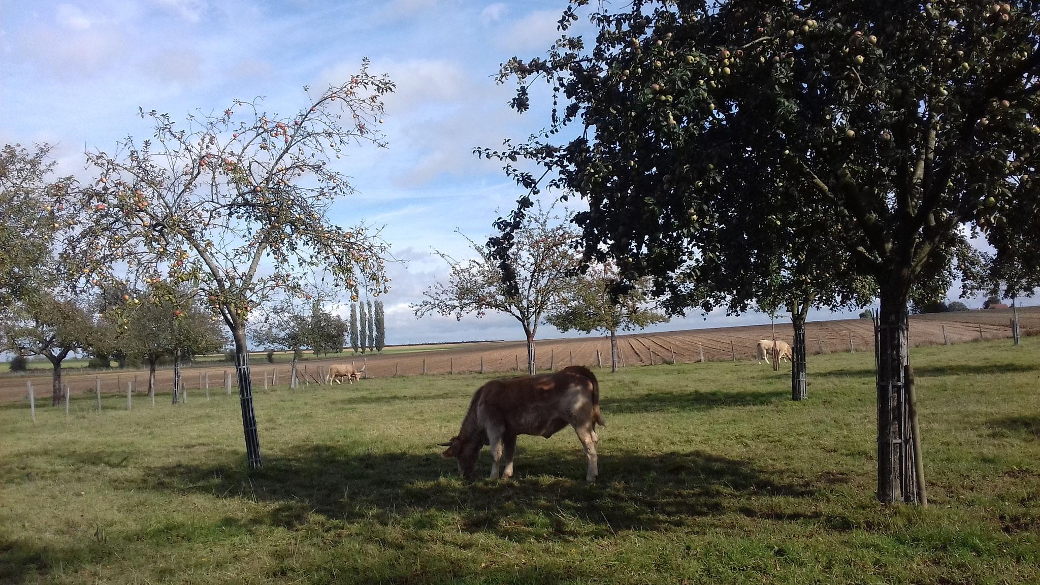 Bois d'Ennebourg