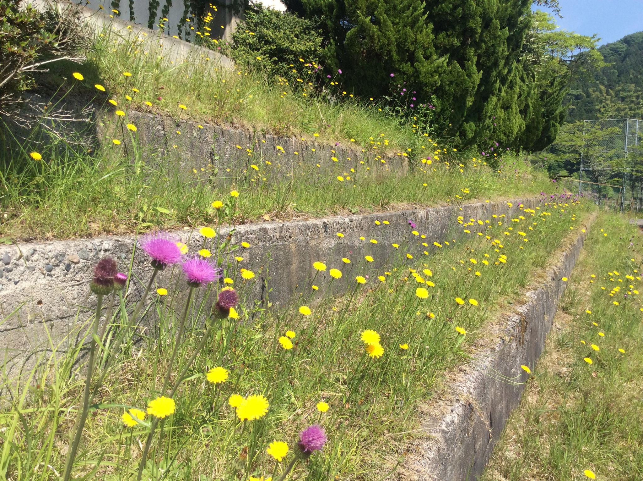 自然の季節の花がたくさん咲いています