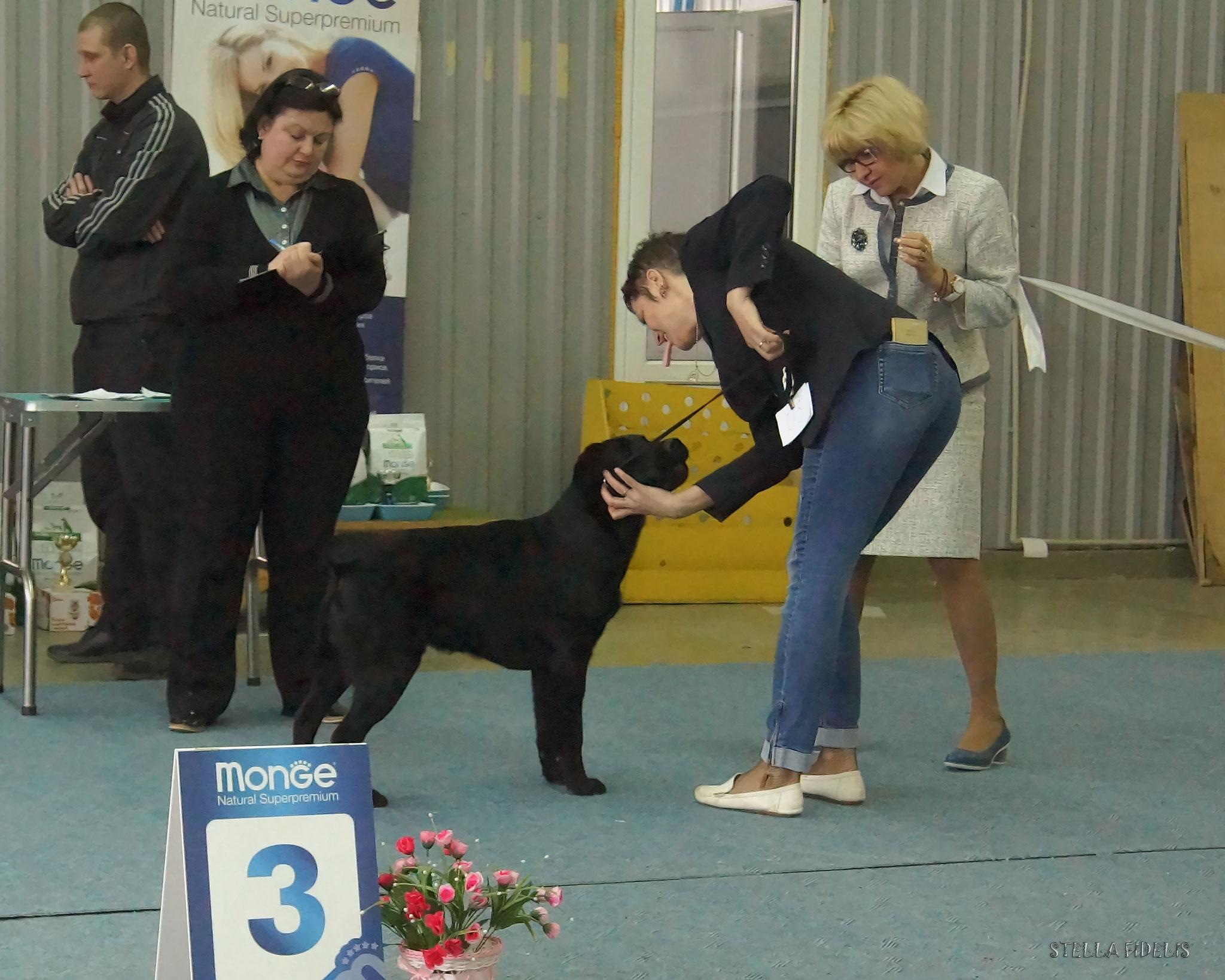 Шегги Доктор Нуф Нуф - лучший щенок монопородной выставки