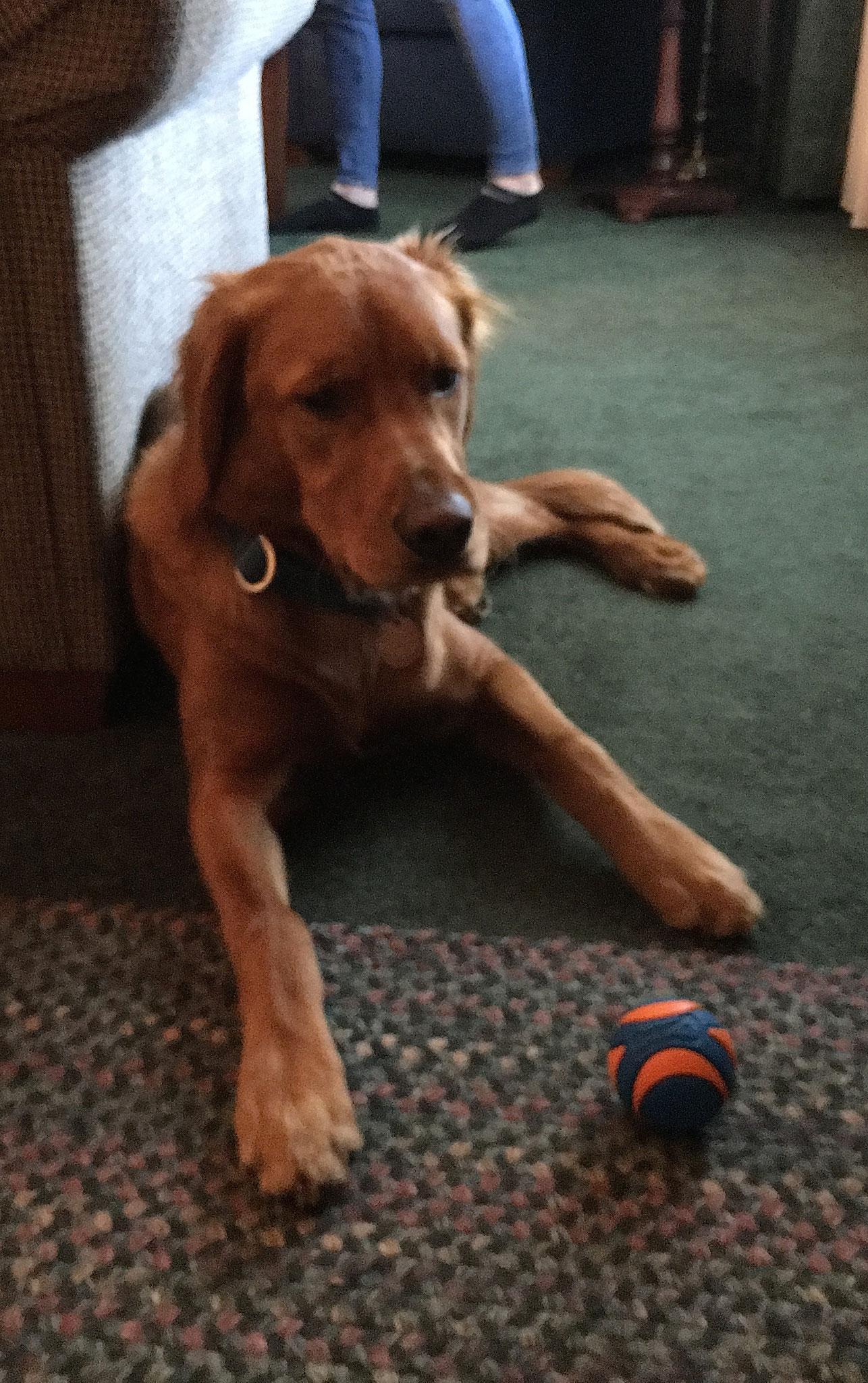 Ann's dog Wrigley