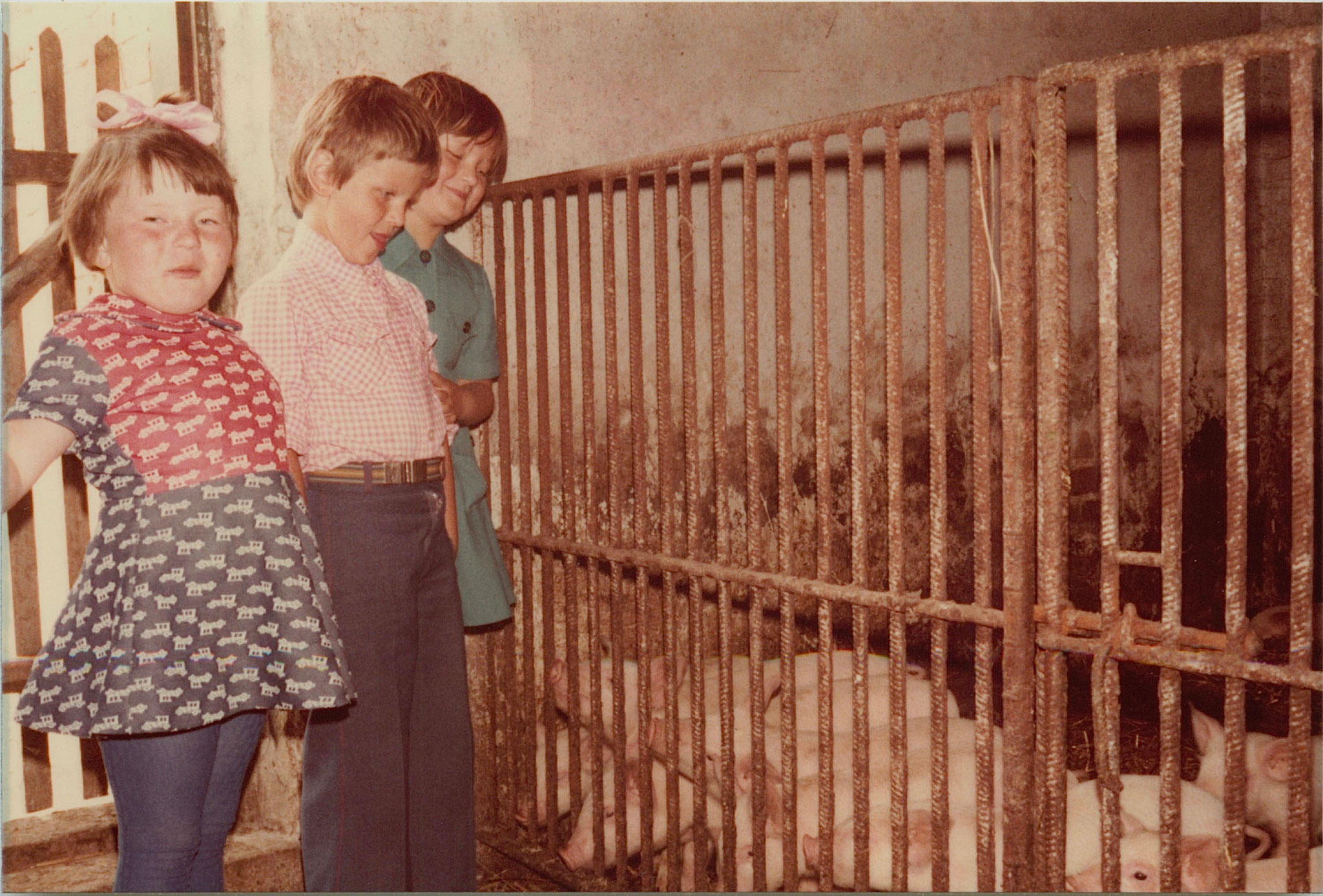 Irena, Adam, & Margaret with Jadwiga's pigs on the farm