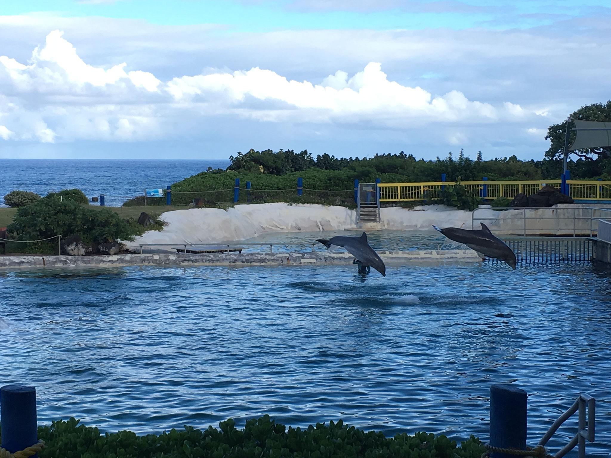 Dolphin Show, Oahu, 2019