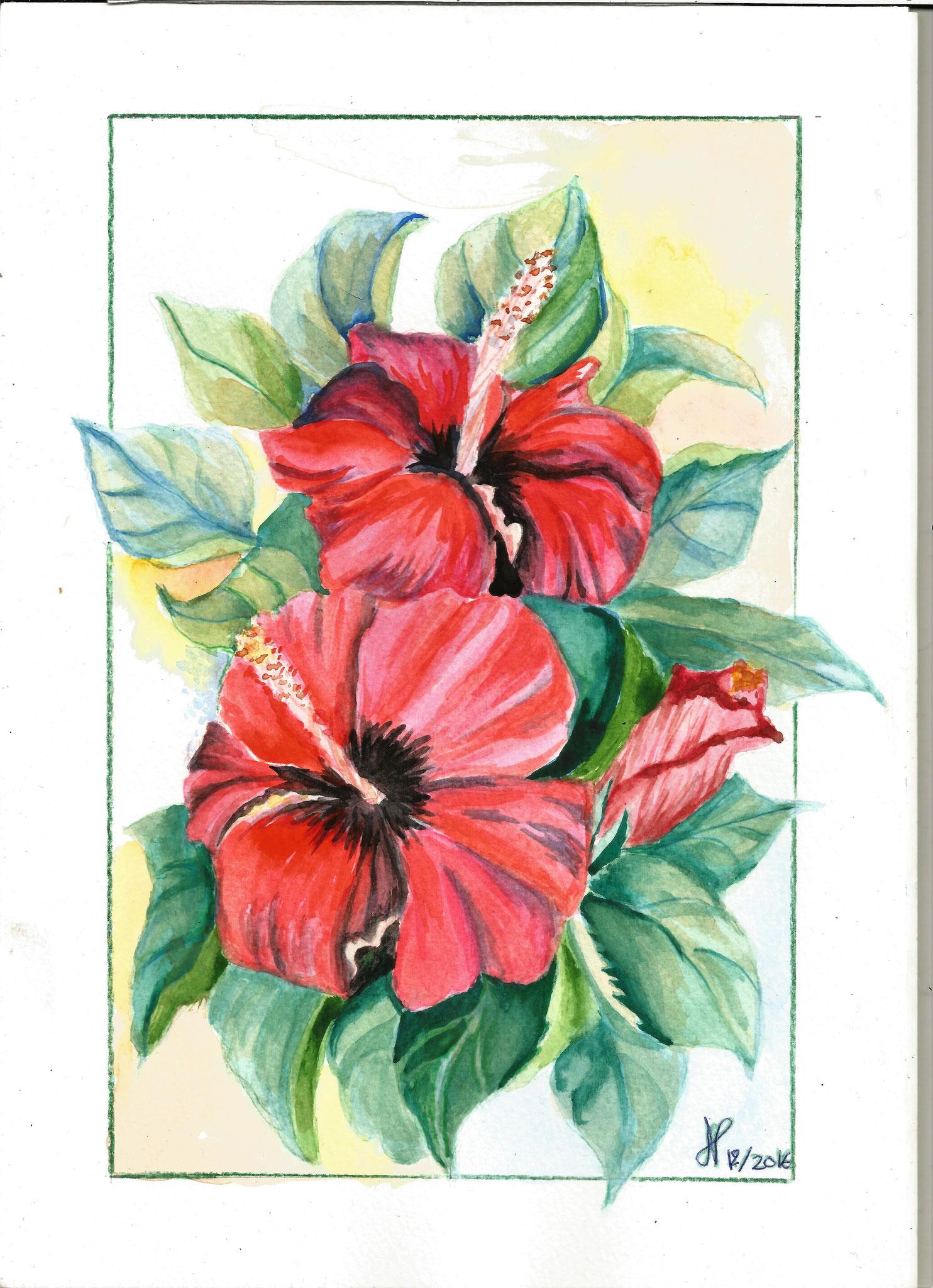 Hibiscus aquarelle dec 2016 Josette