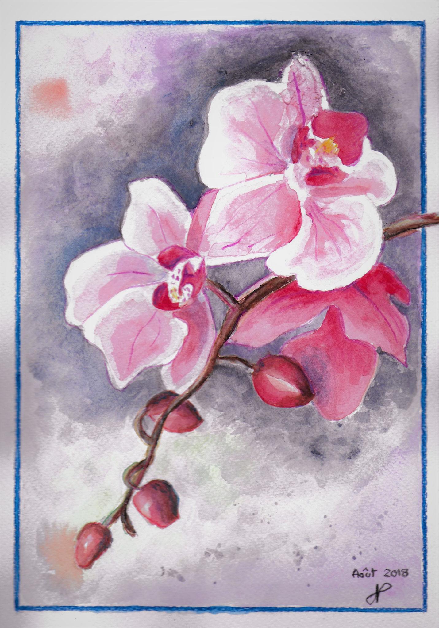 Orchidées aquarelle aout 2018
