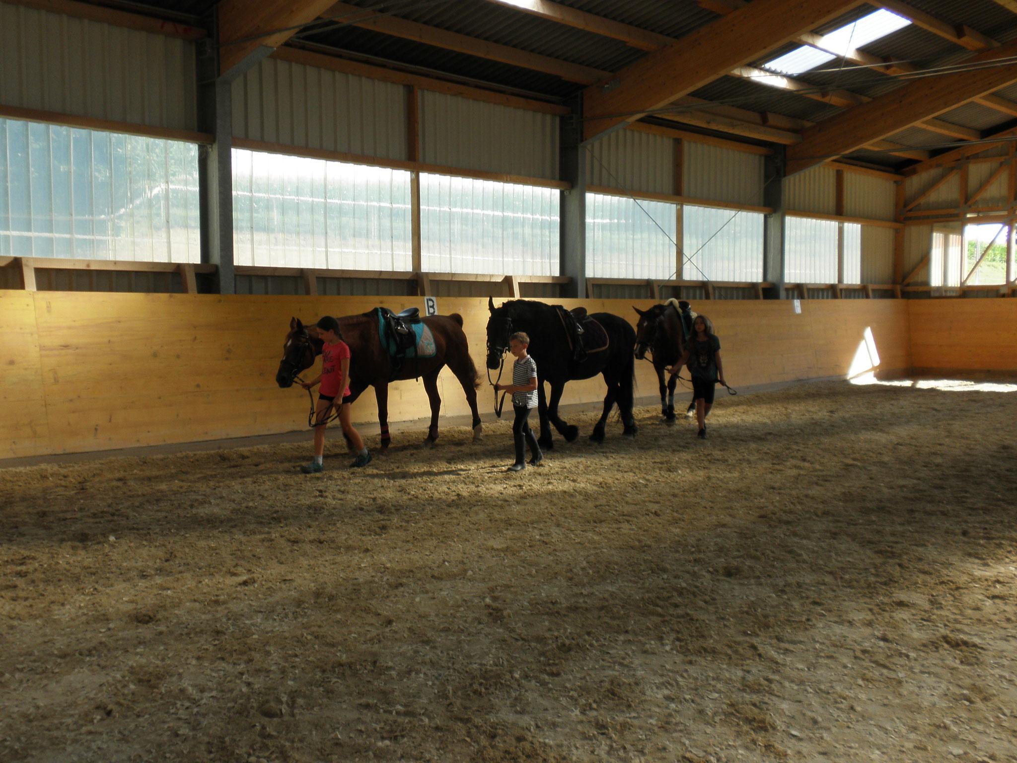 beim Pferdeführen