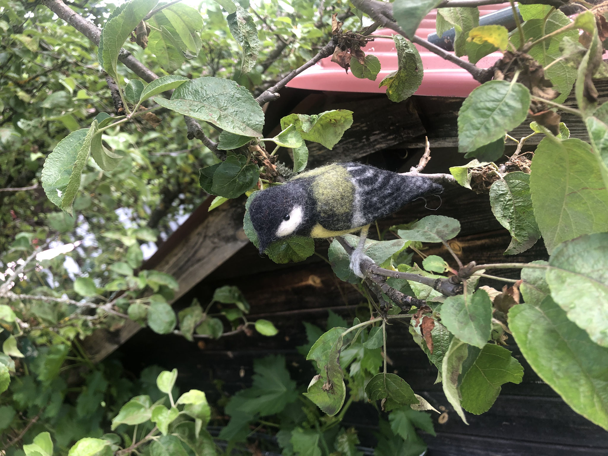 Vogel Kohlmeise 6