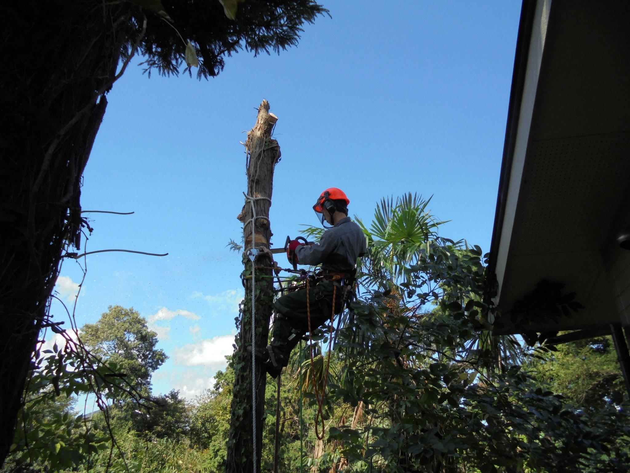 確かな技術でどんな木でも対応出来ます。