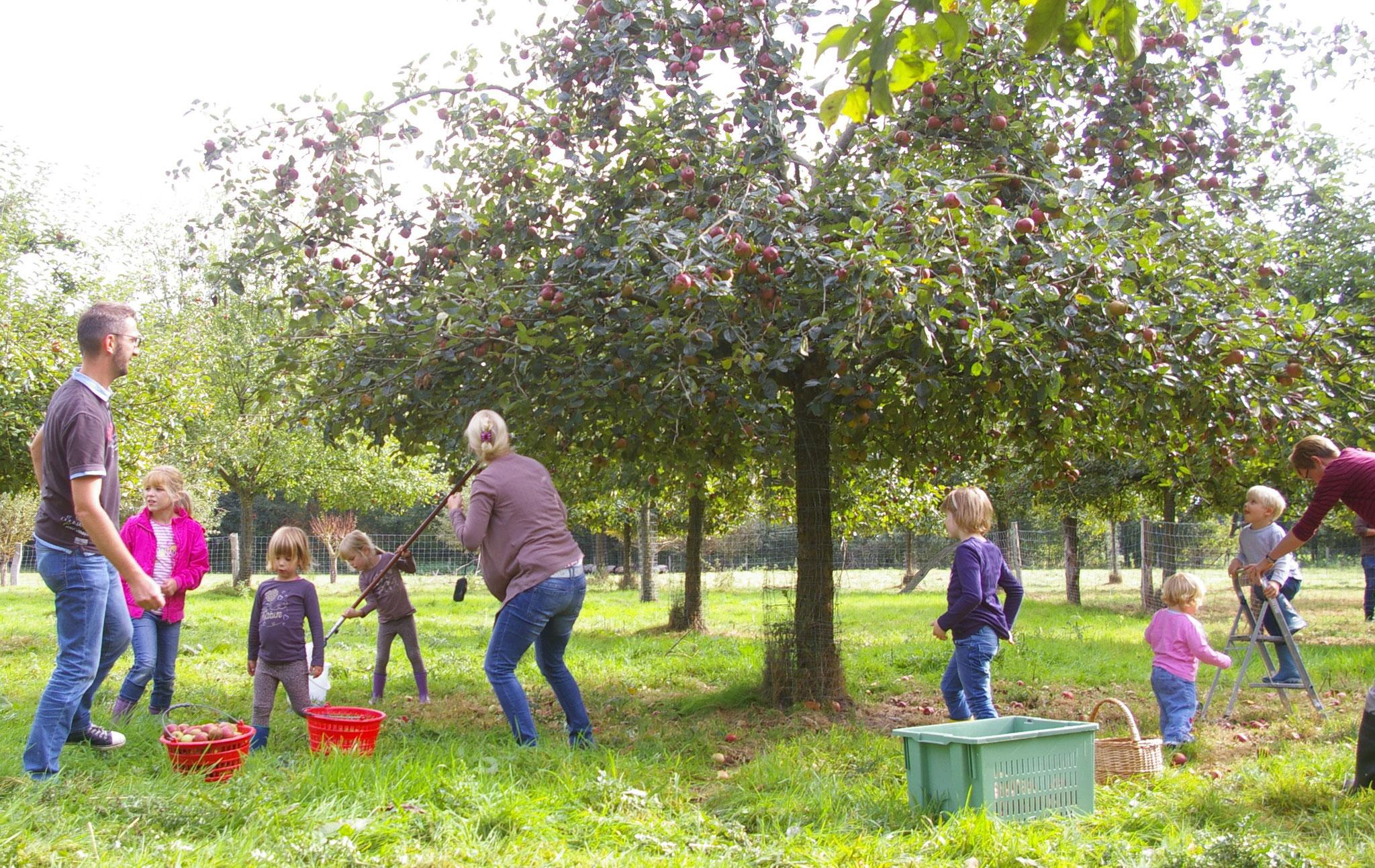 JG-Umwelttag mit Apfelpflücken