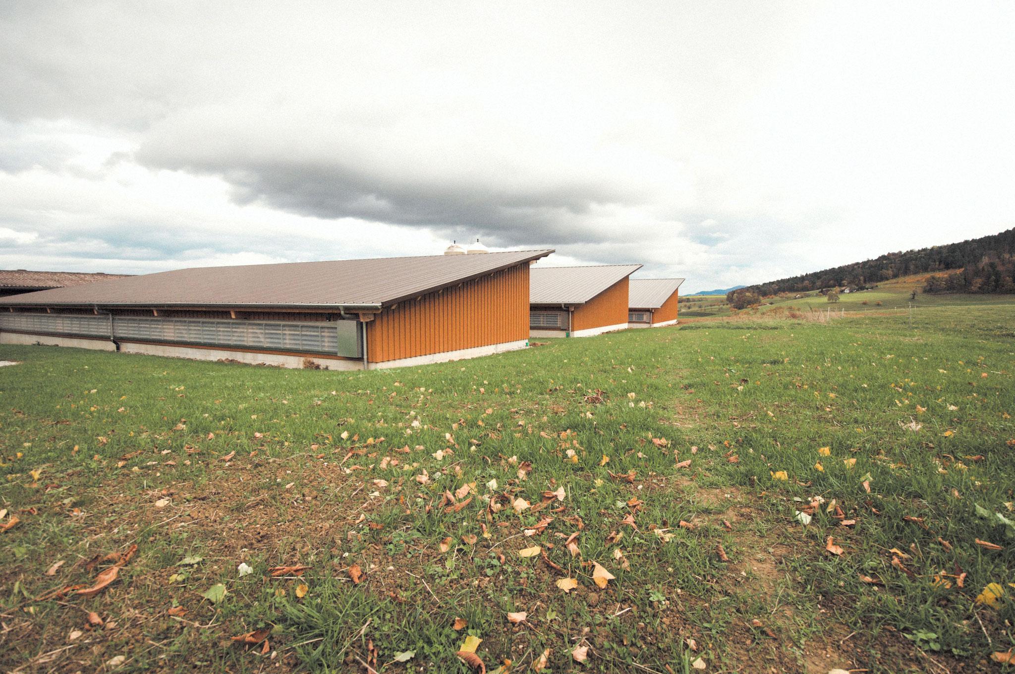 Neue Schweineställe für mehr Tierplatz und -komfort Hof Ebnet