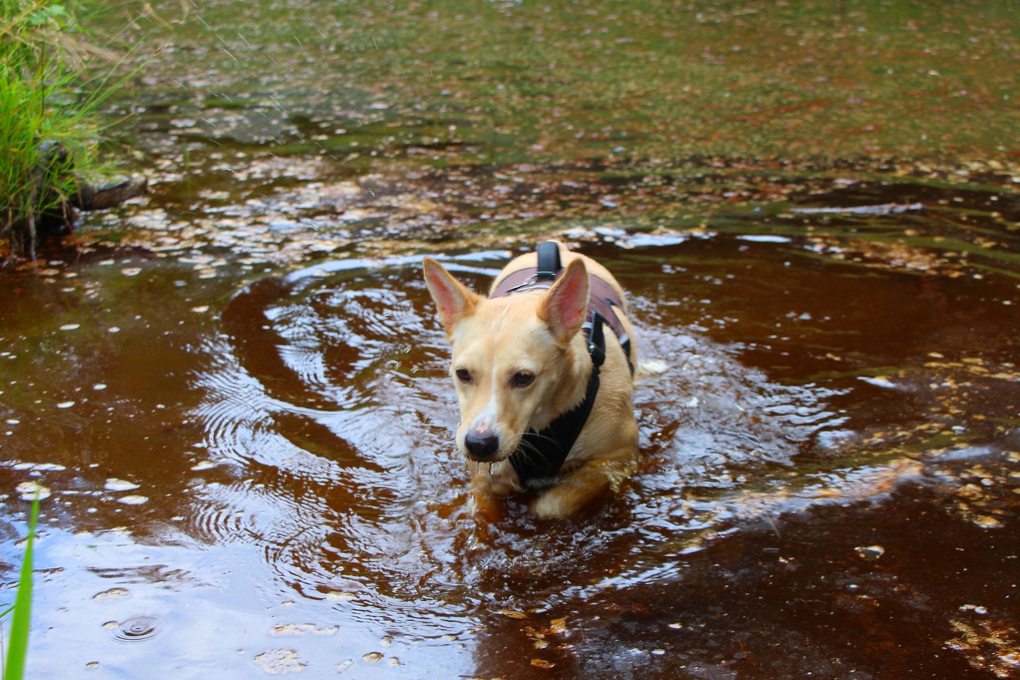 Urlaubsgast Joy hat den Hundebadeteich im Wald entdeckt