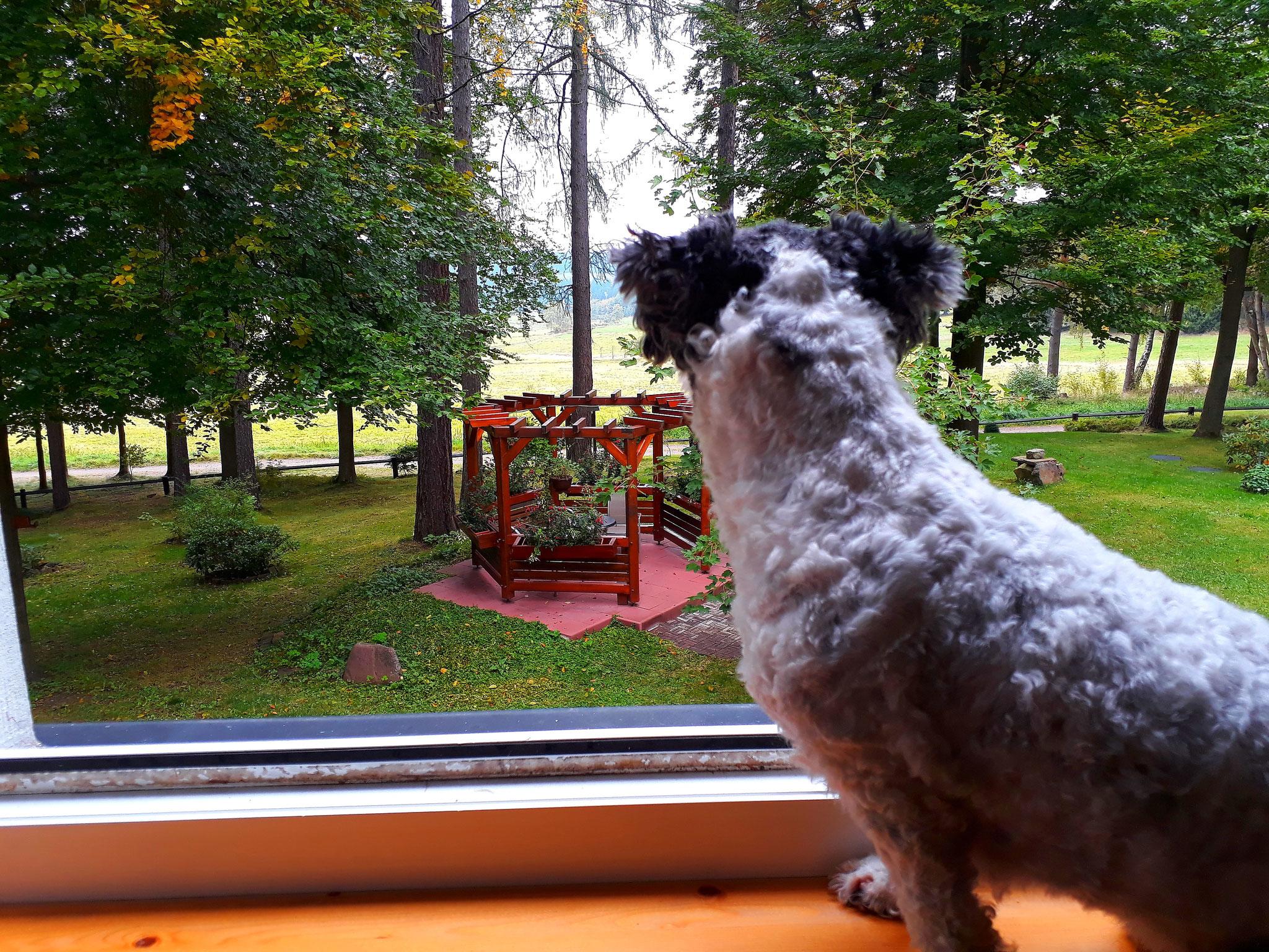 Urlaubsgast Meggi genießt den Blick in die Ferne