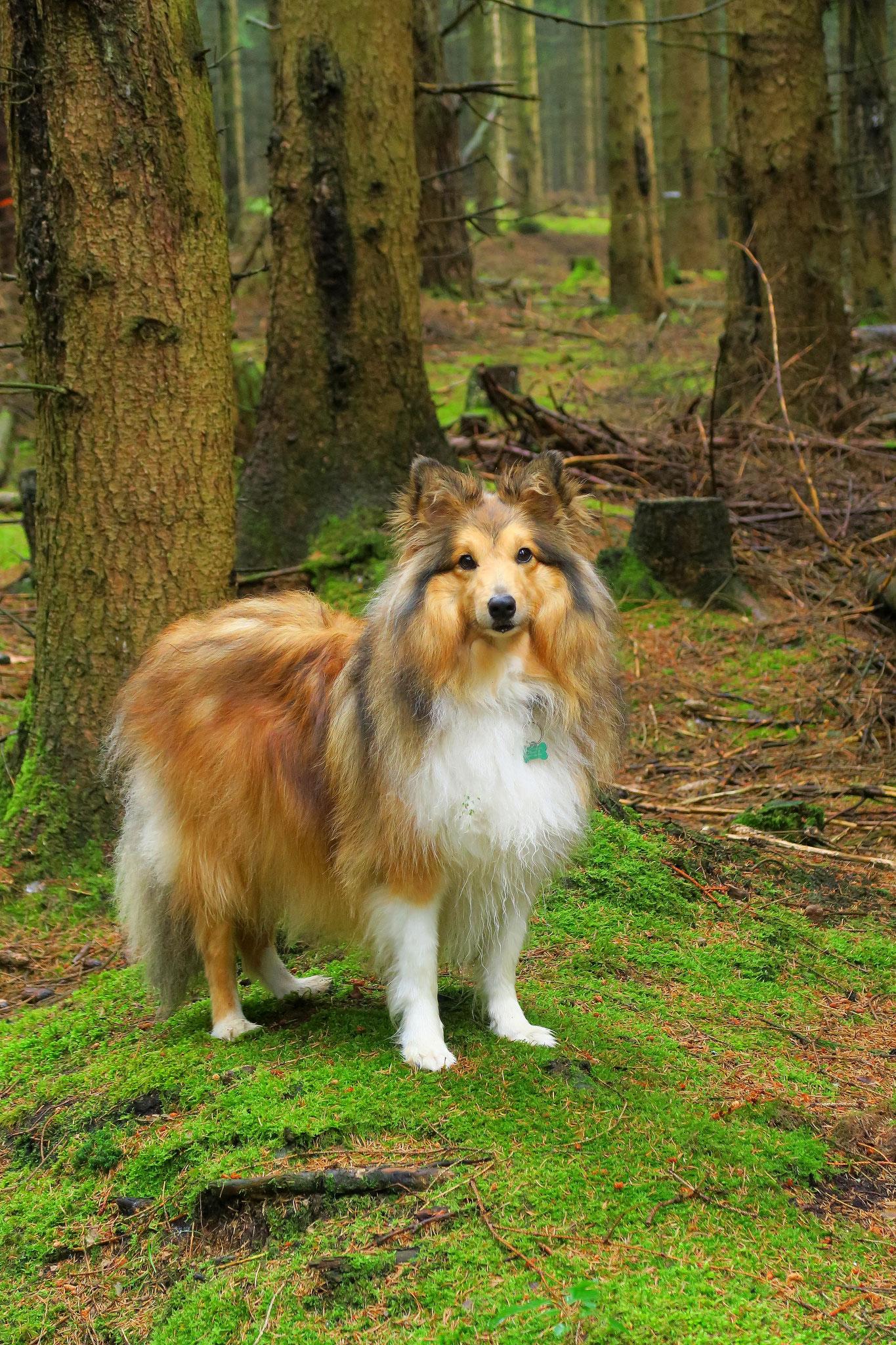 Urlaubsgast Benny genießt den Wald