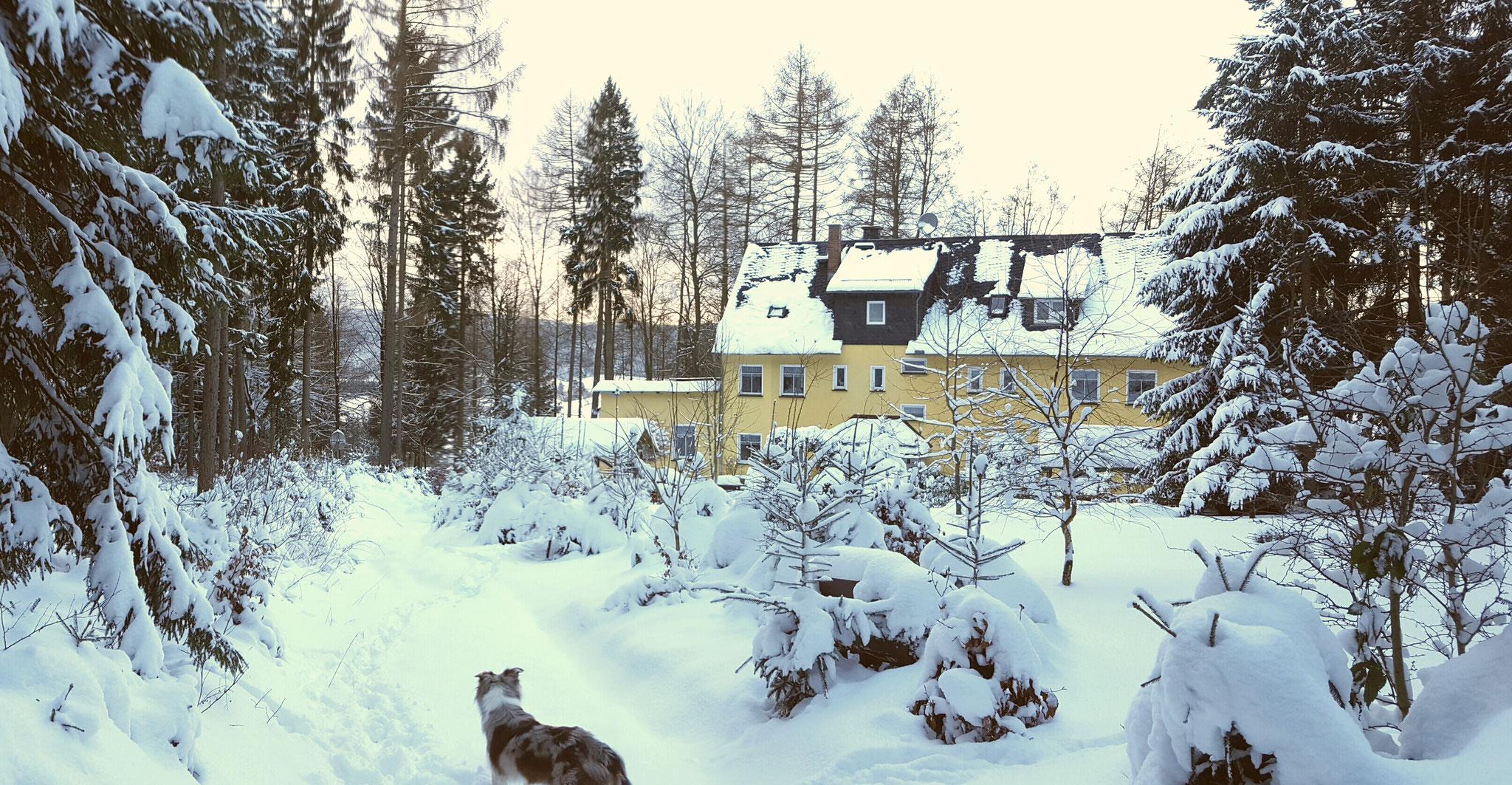 Waldbaude im Schnee