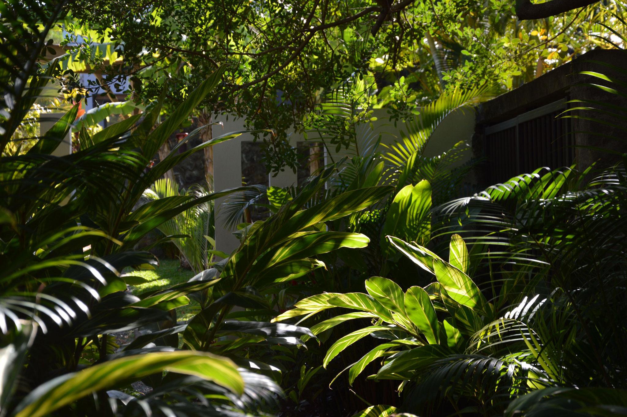 Entrée de jardin © Rc-Paysage