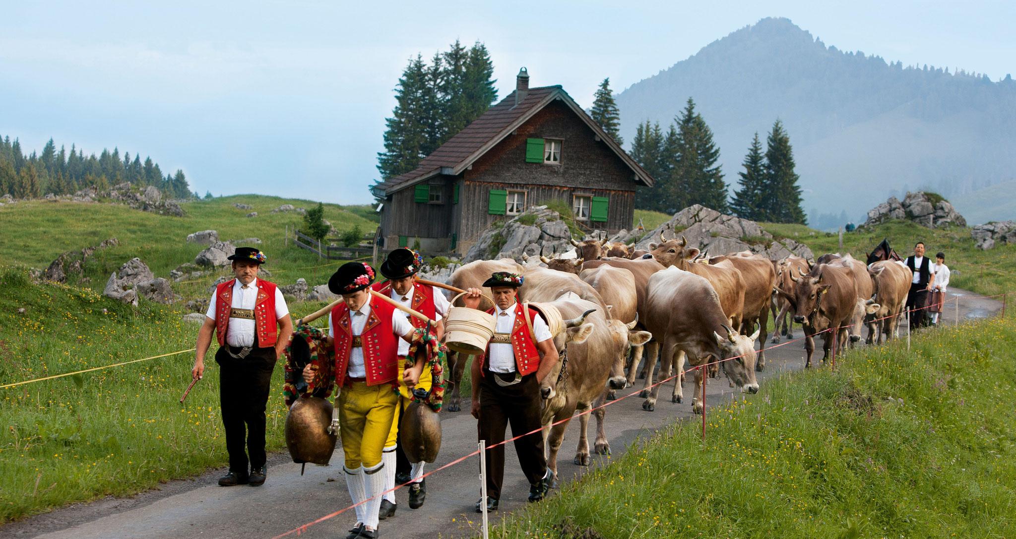 Appenzell Viehabzug