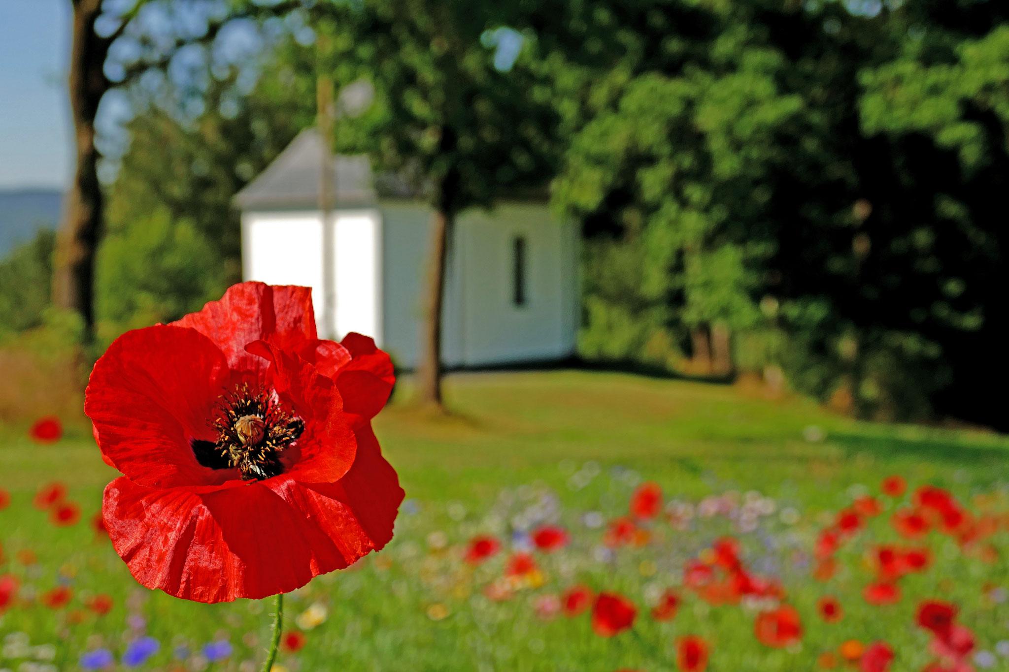 Meinolf Riekes - Blumenwiese vor der Kreuzkapelle - Juli 2020
