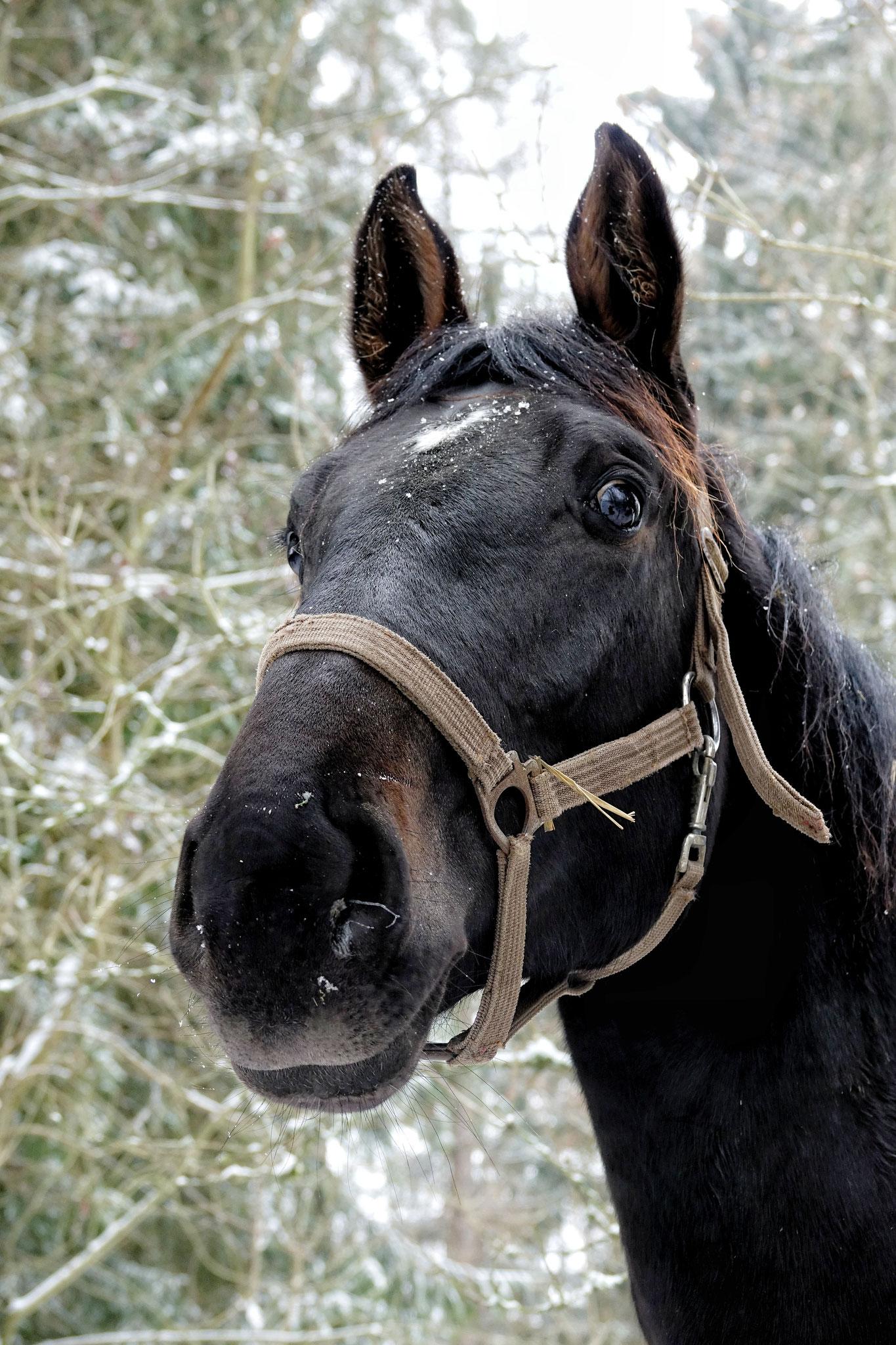 Unsere eigenen Pferde