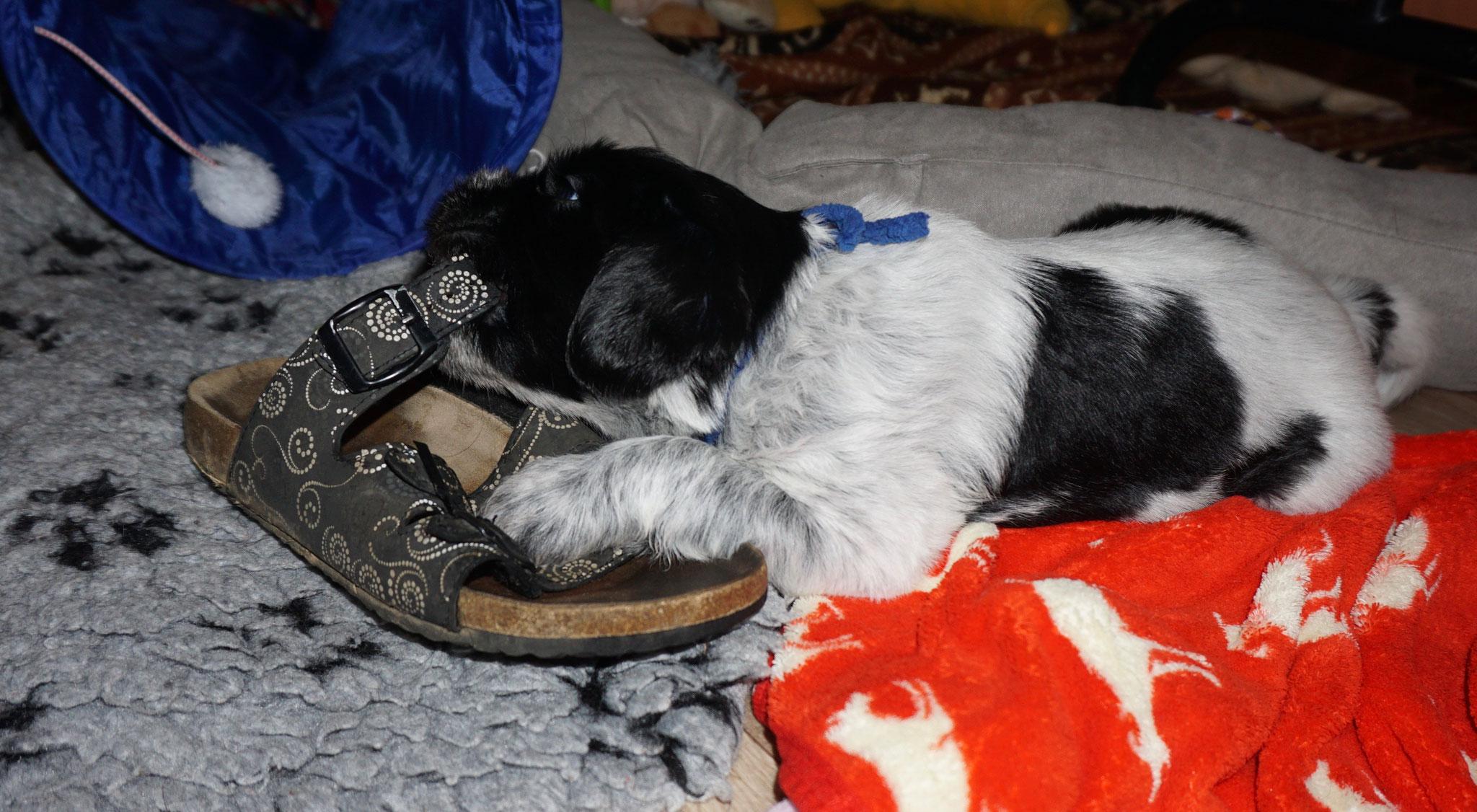 Schuhe schmecken....