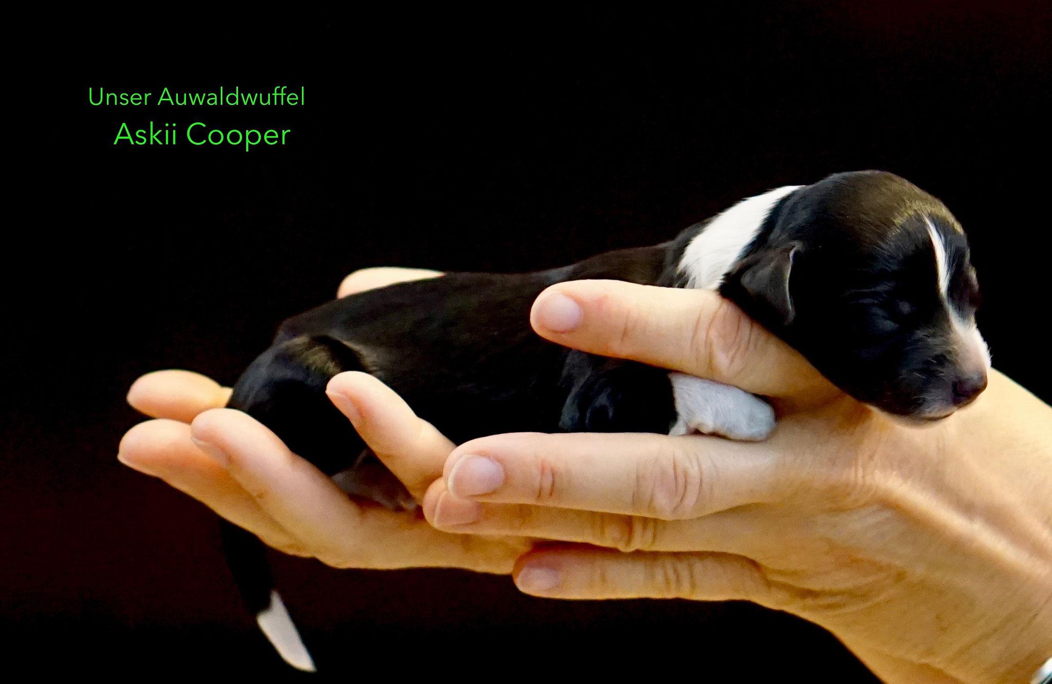 Askii Cooper  (der Junge) - *27.7.2019 14:35 Uhr - 256g
