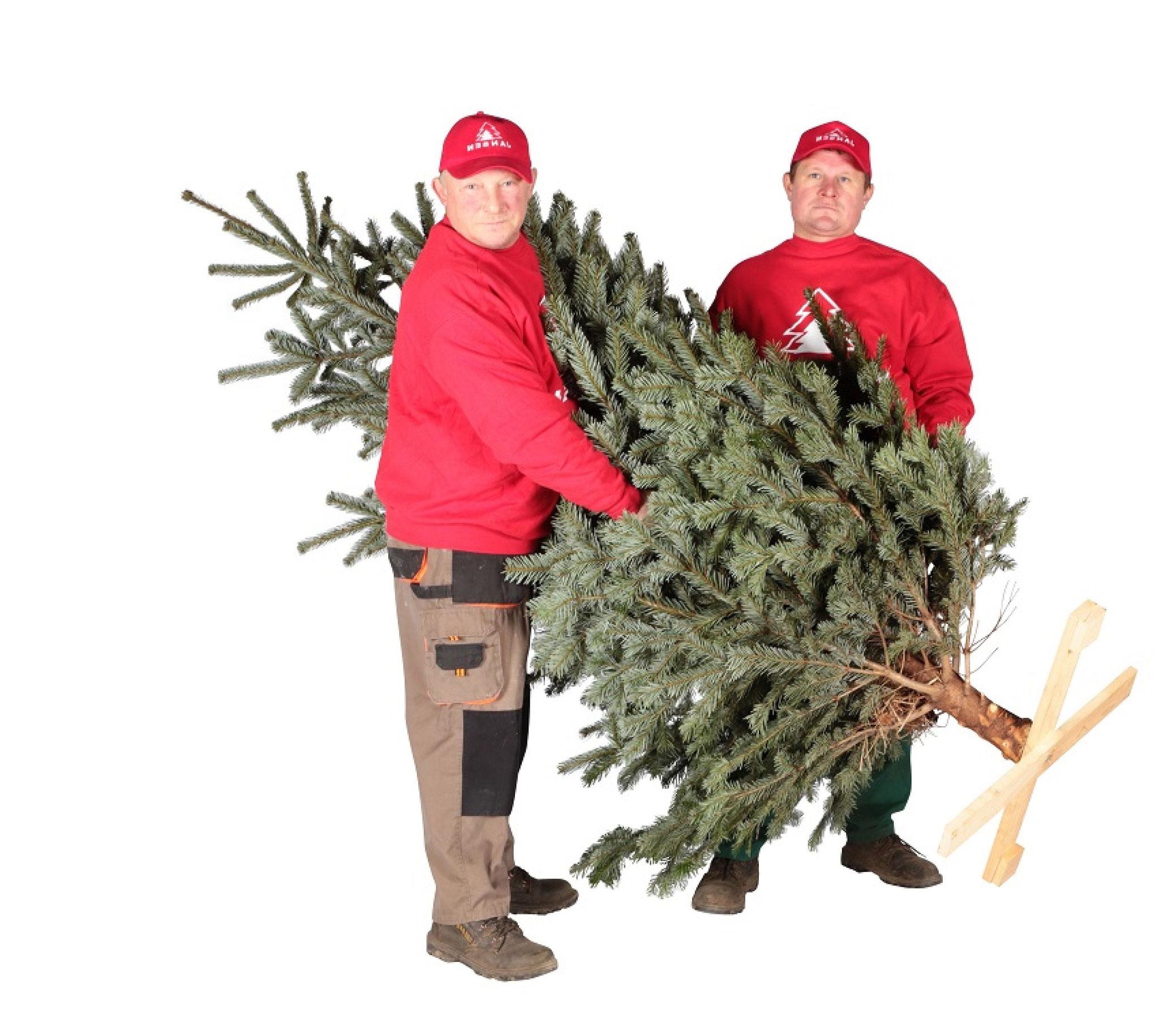 Tannenbaum hamburg lieferservice weihnachtsbaumschlagen weihnachtsbaum kaufen weihnachtsbaum - Weihnachtsbaumverkauf hamburg ...