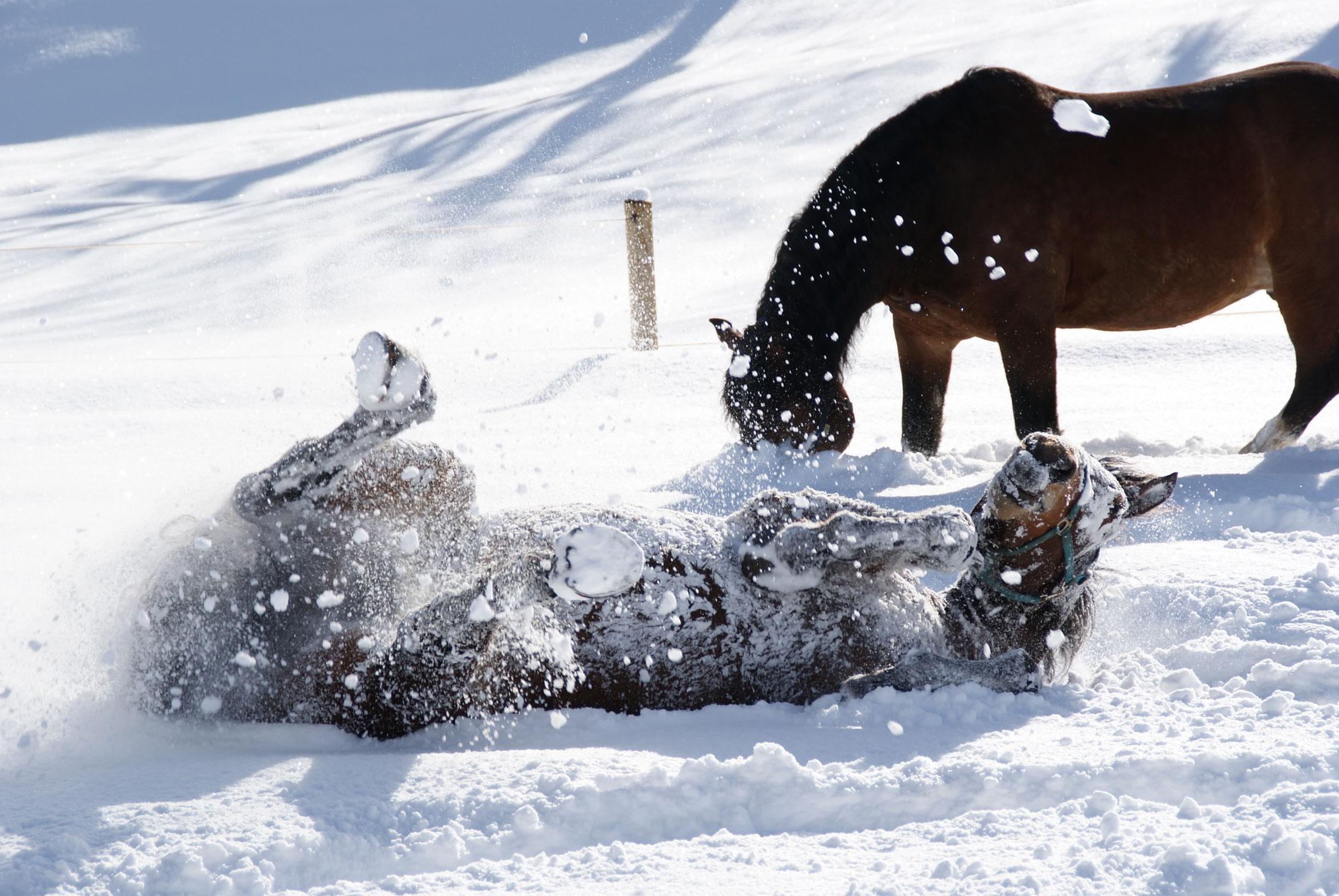 Greinhof Birkenstein - Unsere Pferde fühlen sich wohl