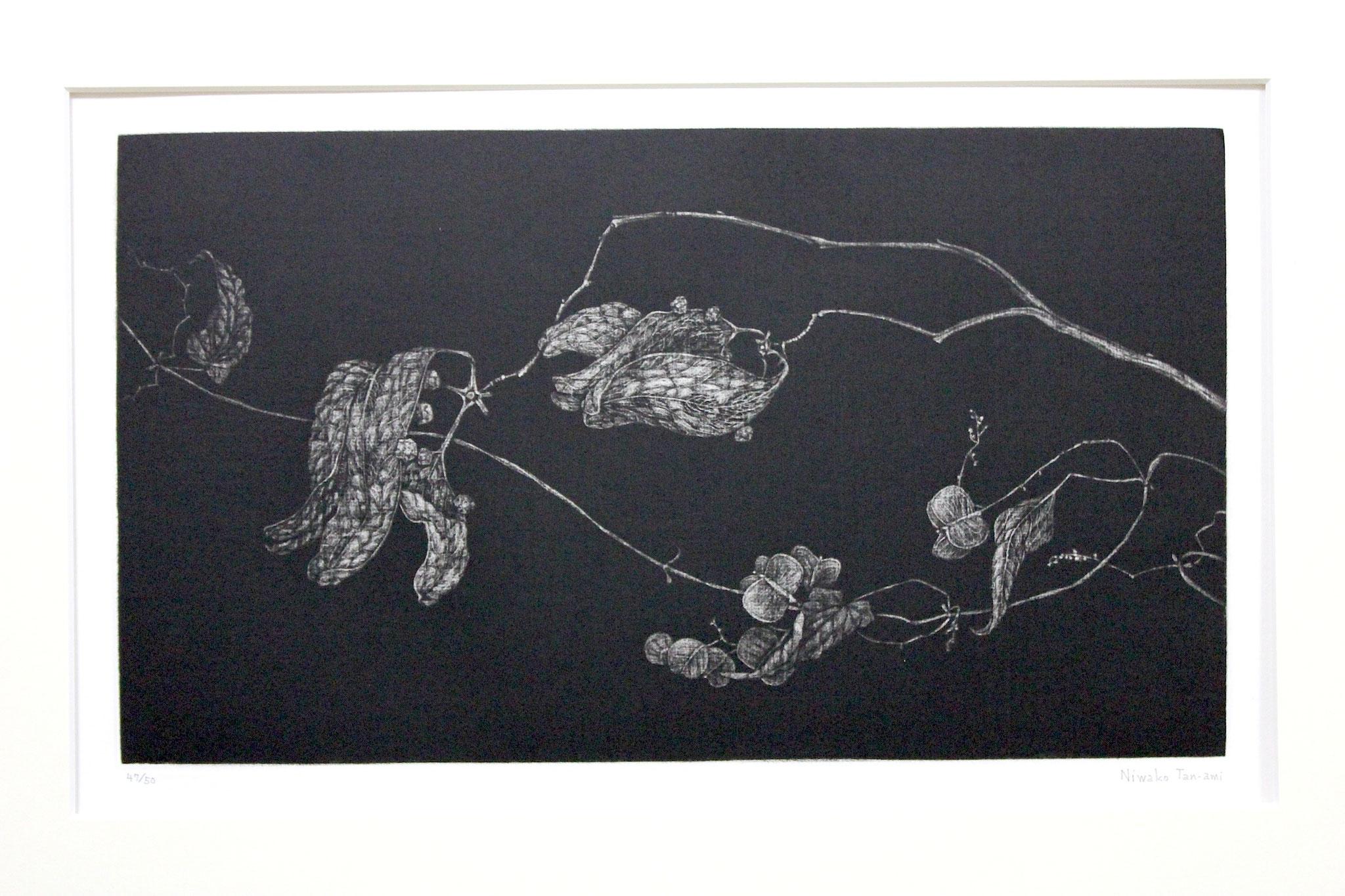 Niwako  Tanami  /  丹阿弥丹波子 梧桐の実  メゾチント、紙 1983年