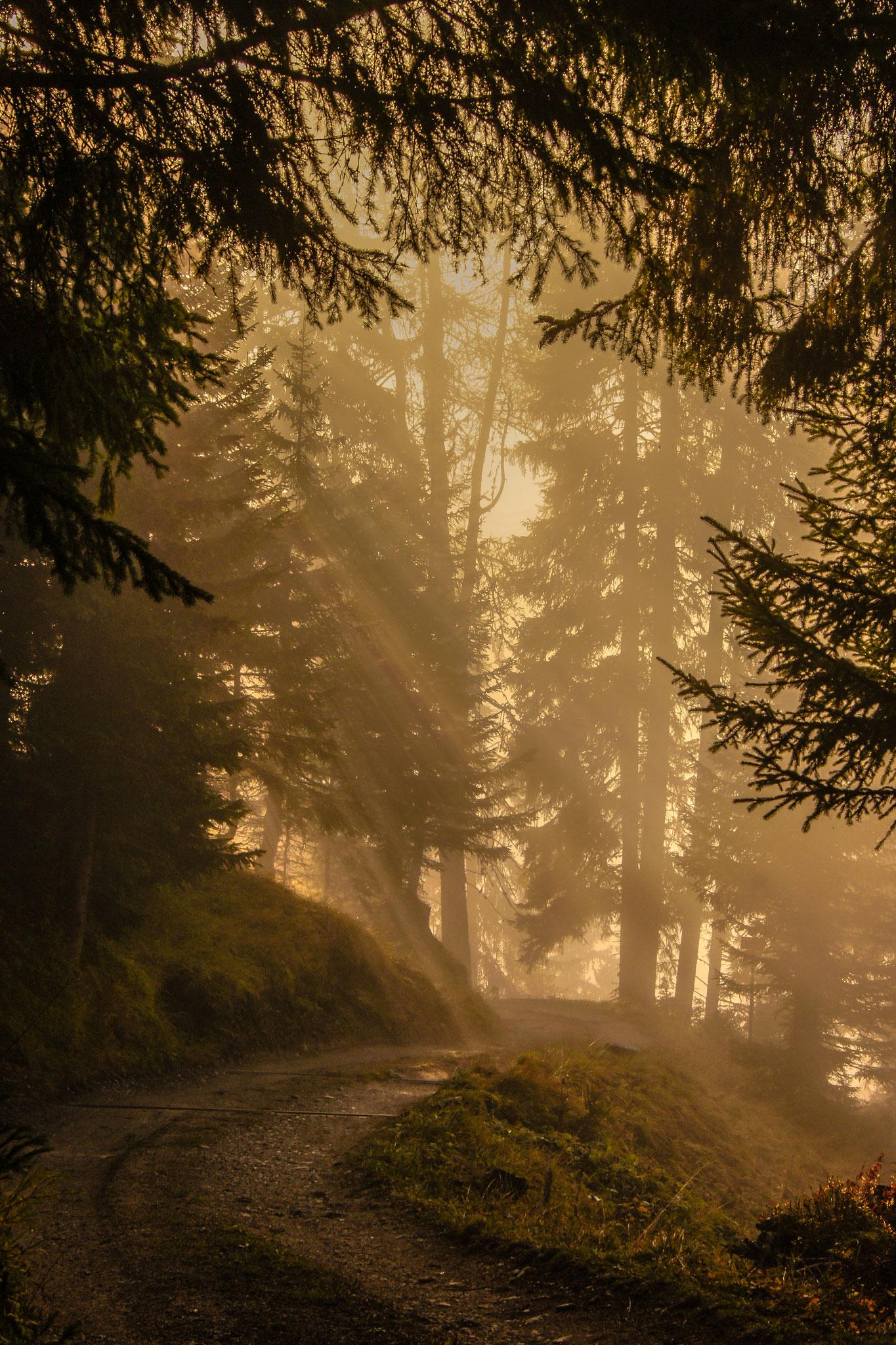 Mystischer Alpweg  (Foto: Bruno Riedhauser)