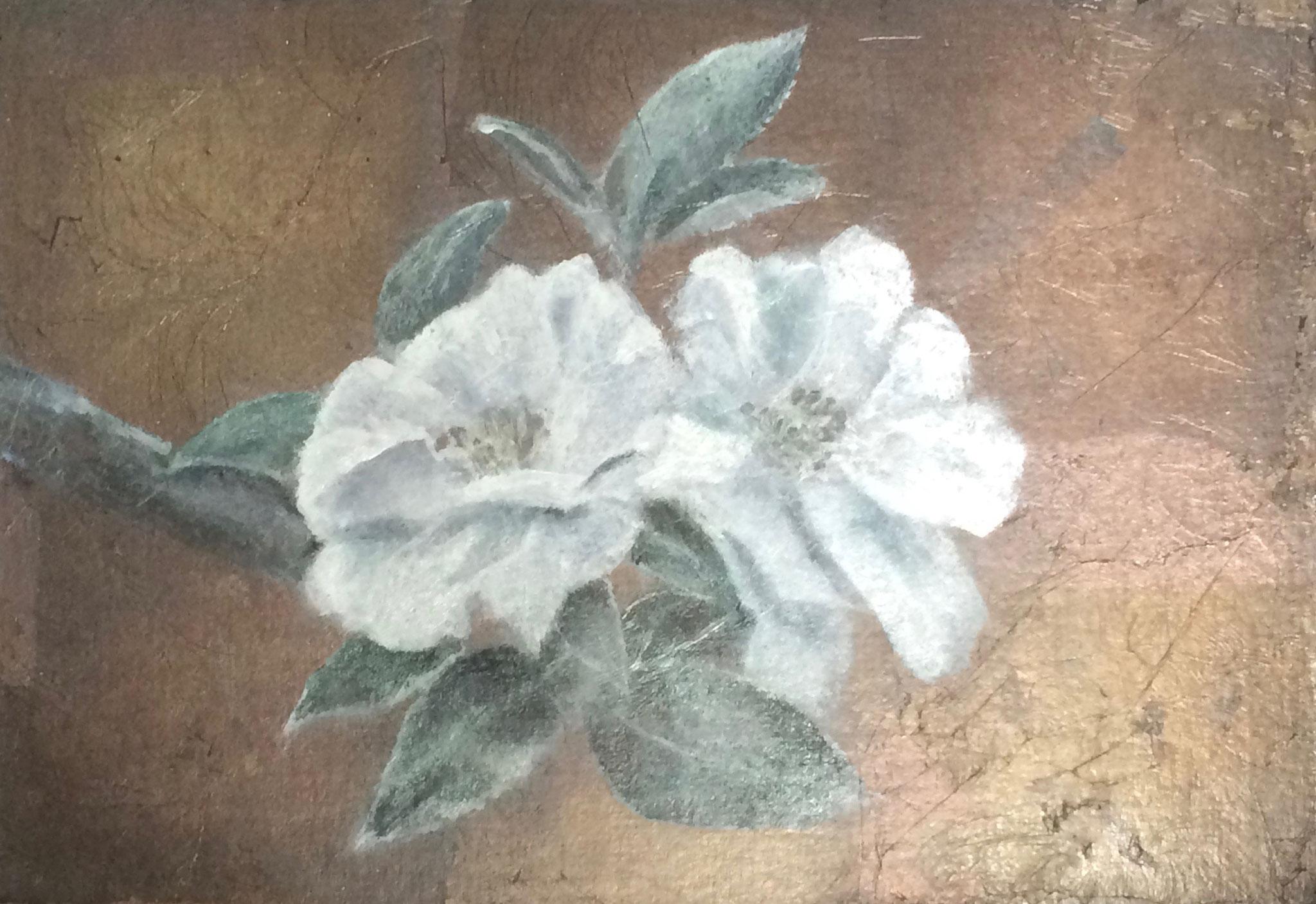 白椿  250×360mm
