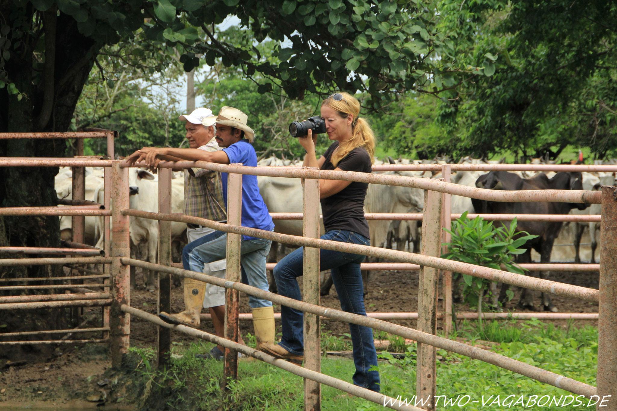 VENEZUELA 2014 - LLANOS / BEI DEN COWBOYS