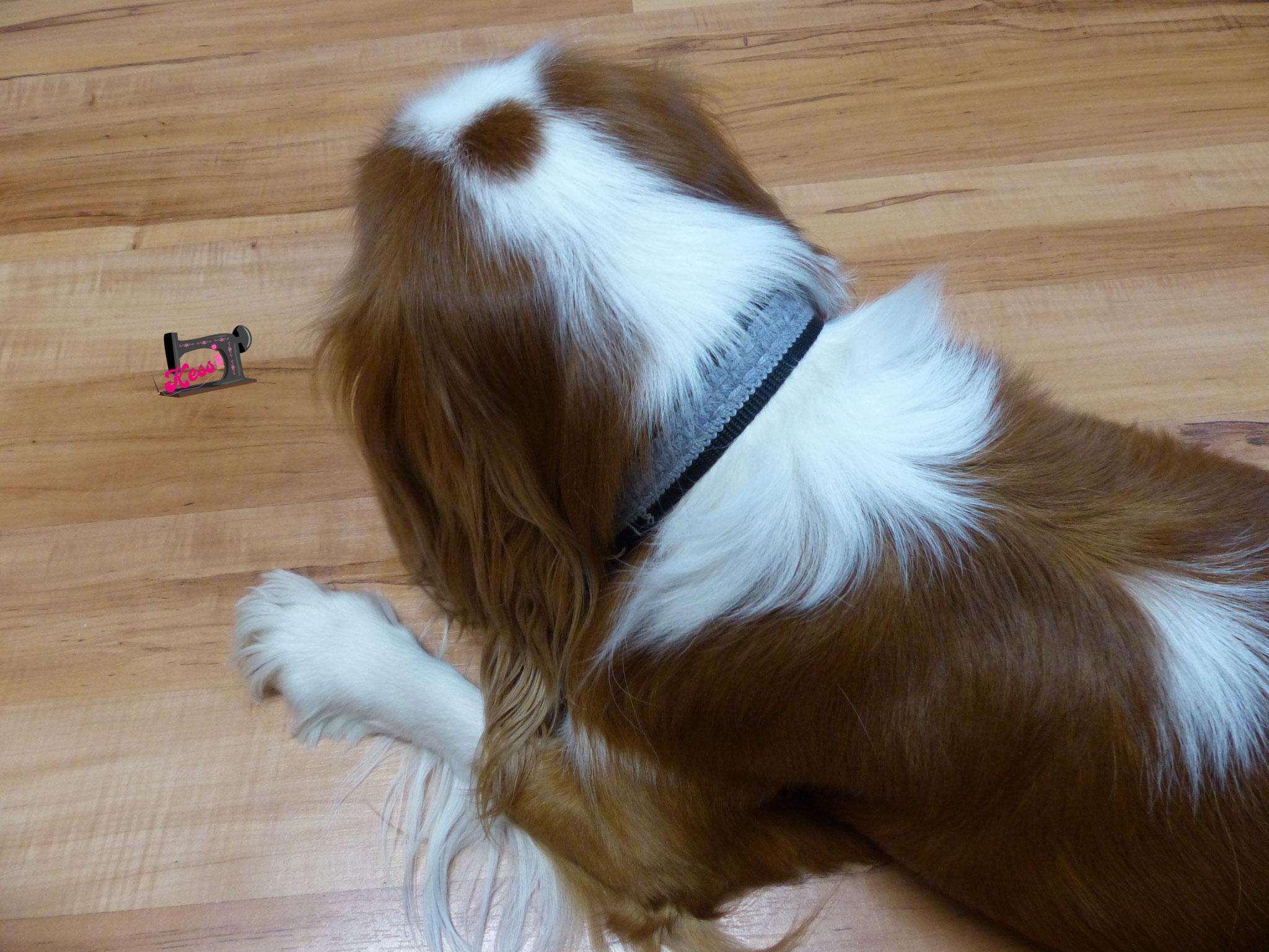 Hundehalsband für Sunny