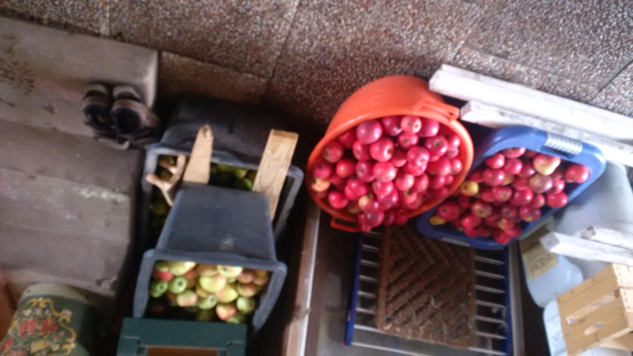 Der Rohstoff. In diesem Jahr ausschließlich liebliche Apfelsorten mit wenig Säure.