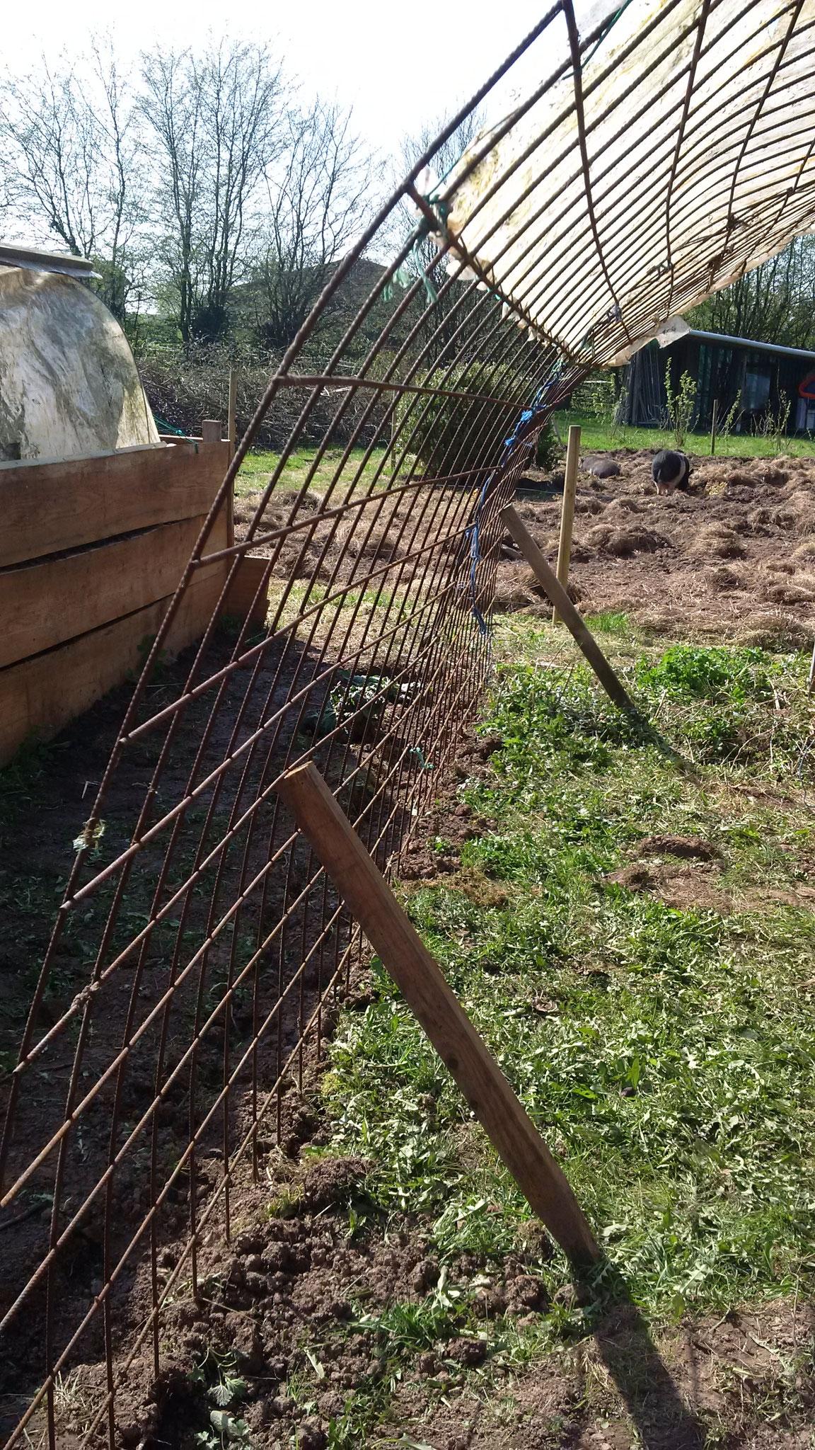 Hier wurden heute Mais, Erbsen (außerhalb) gesäht. Innen werden hier Gurken und Physalis, evtl auch Melonen gepflanzt