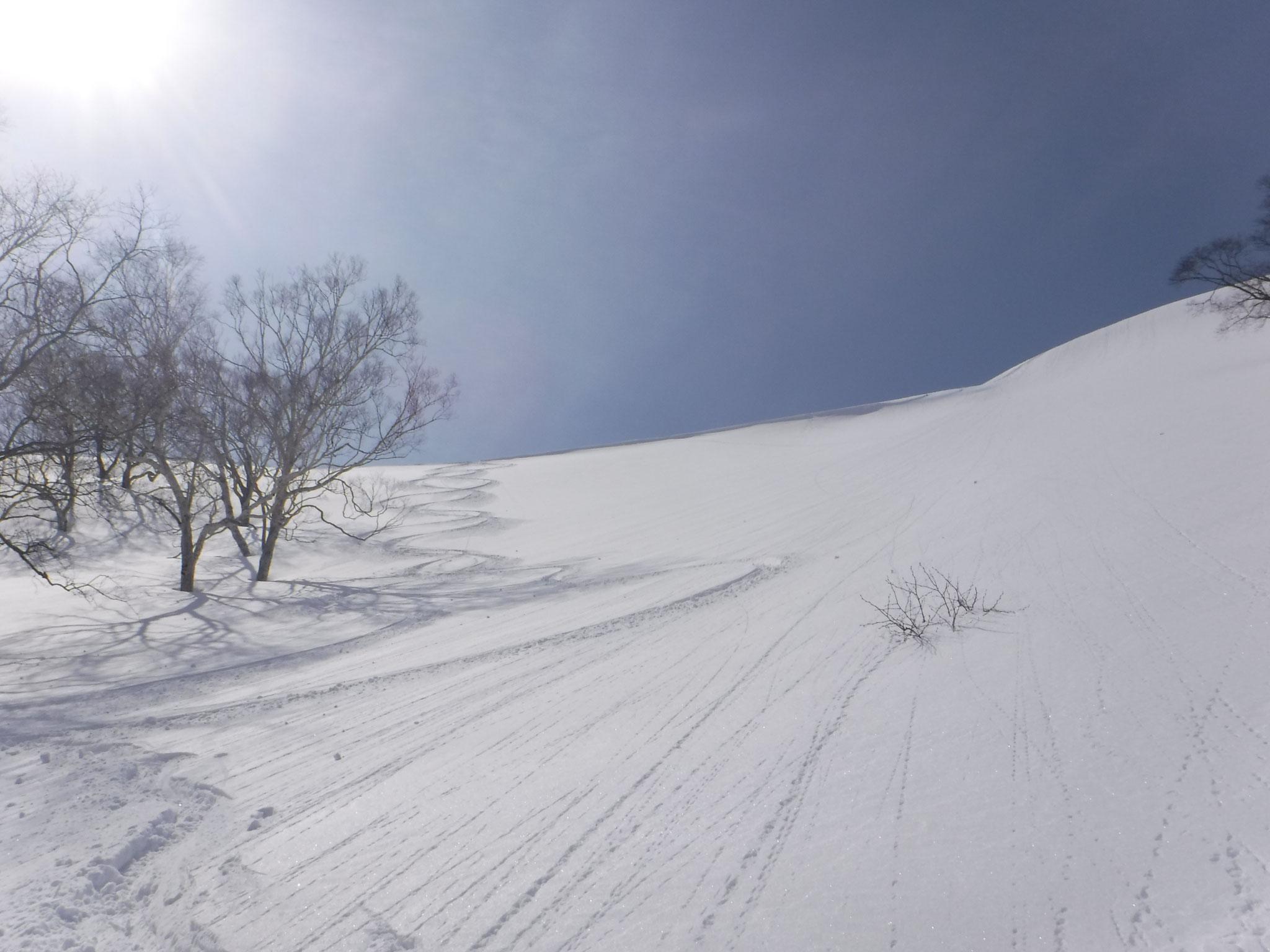 最高の雪質!
