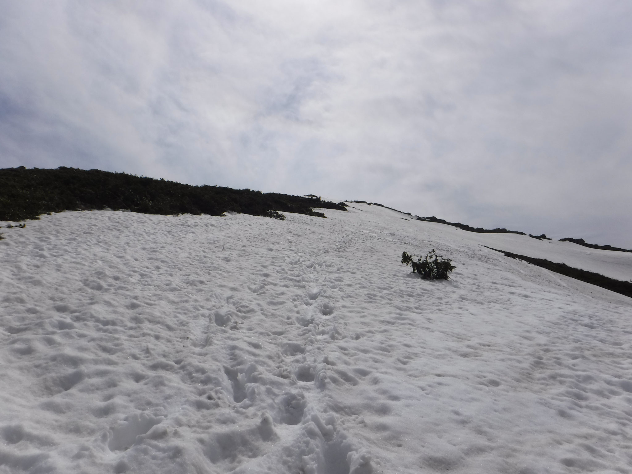 14:25 山頂直下、登山道沿いの雪面