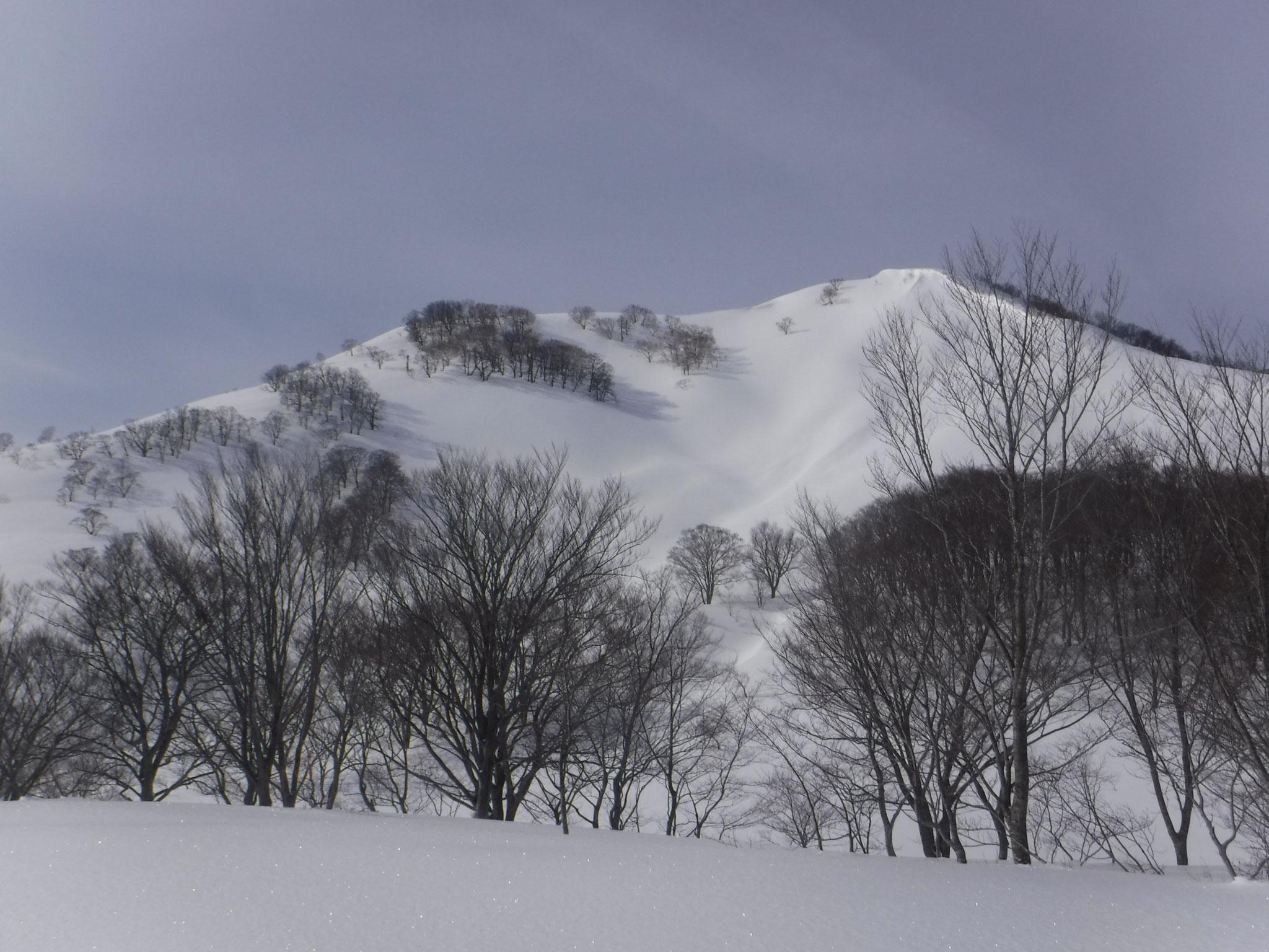 容雅山北東面。標高1200m付近より 8:50