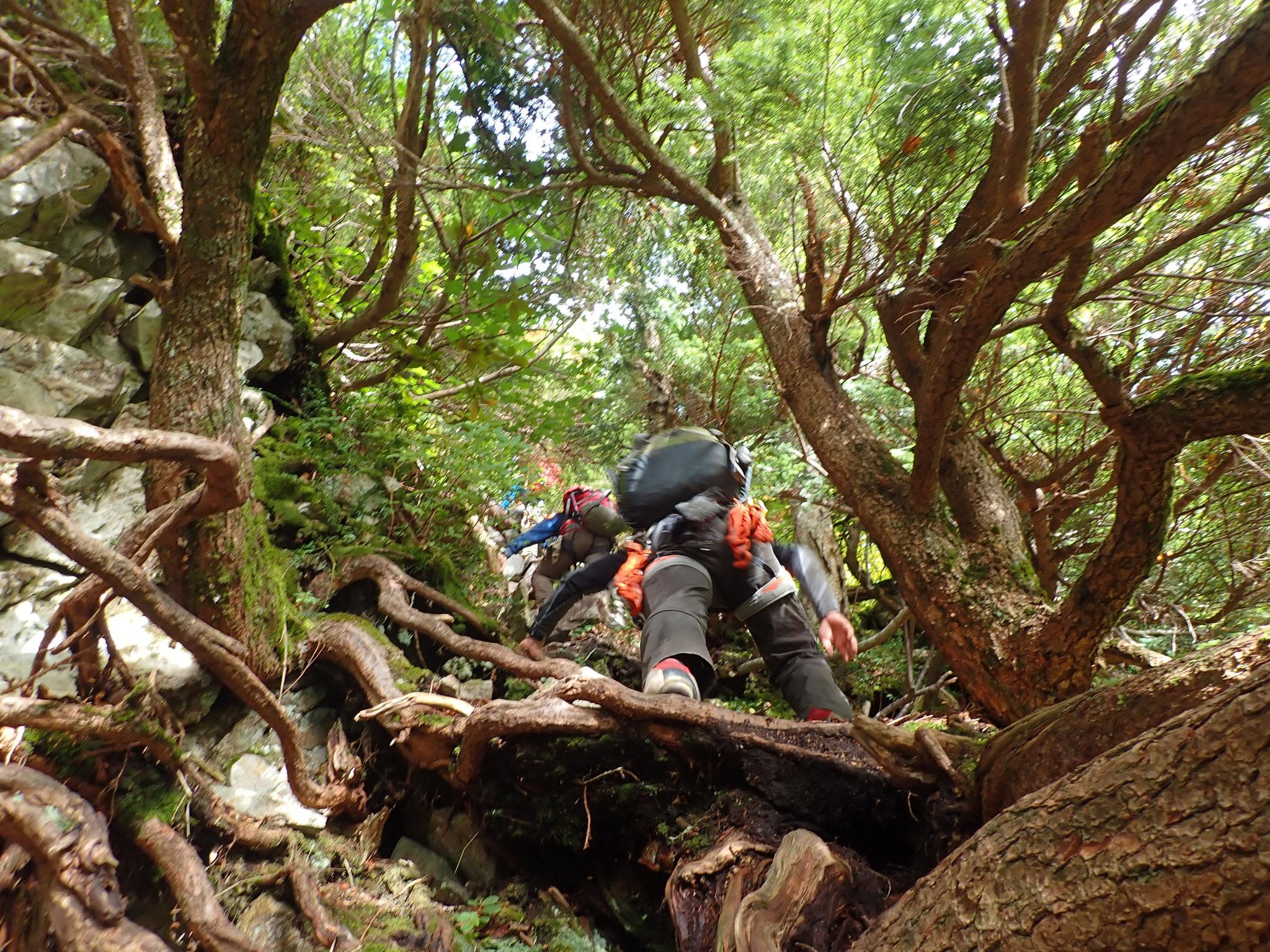 9/24 7:40 1峰下部は、木の根登りといった個所も多い