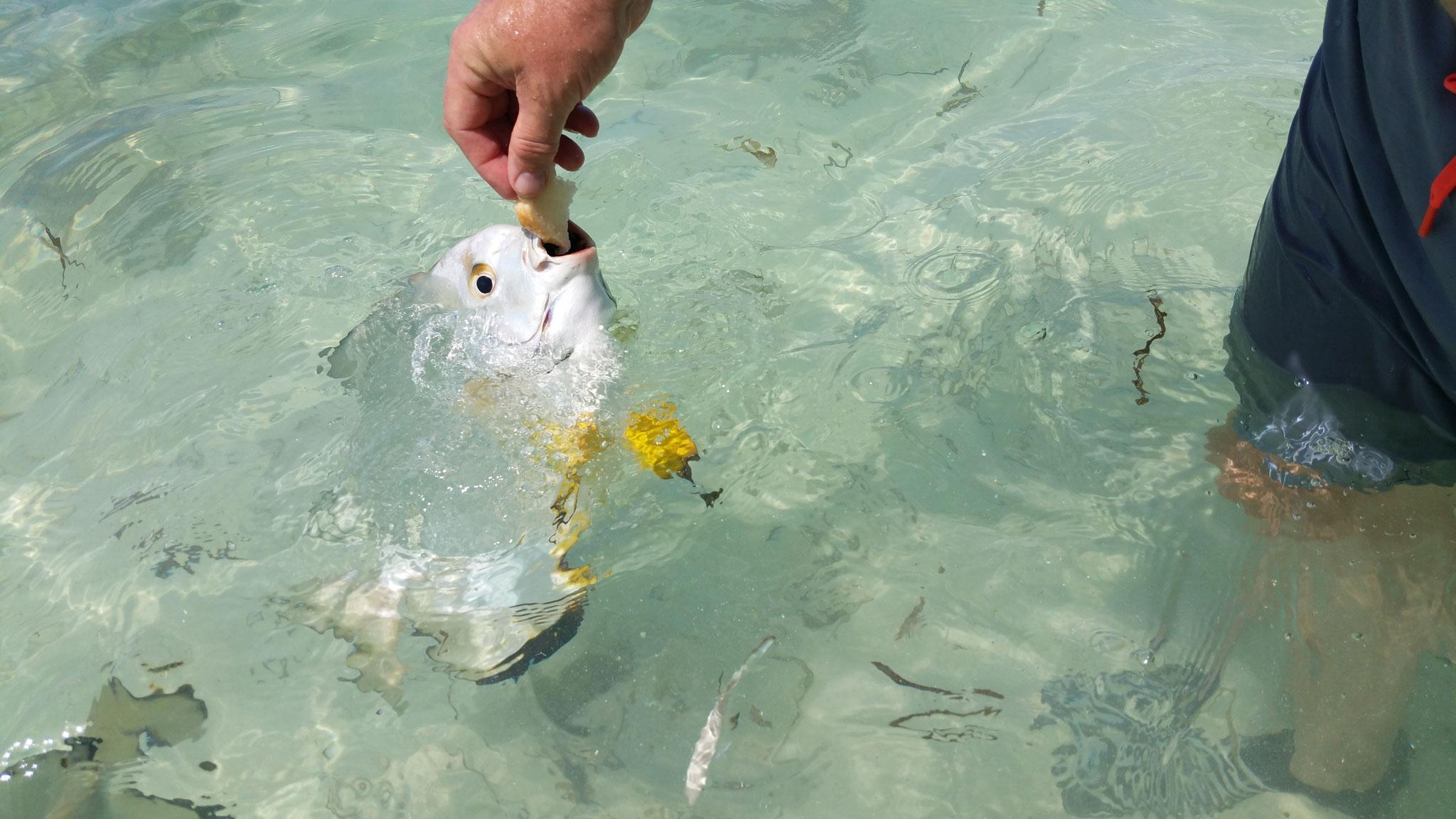 Fische füttern auf den Seychellen