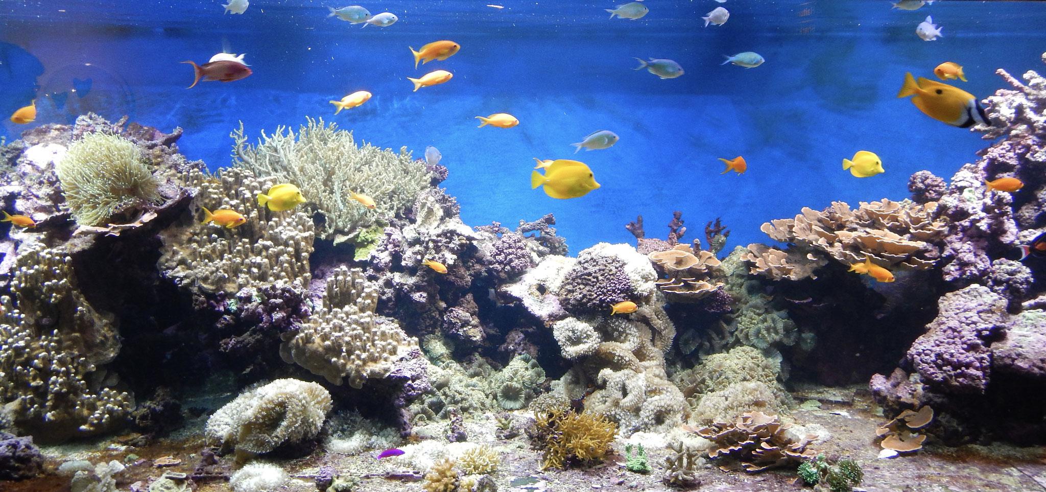 Tropiske Fiske