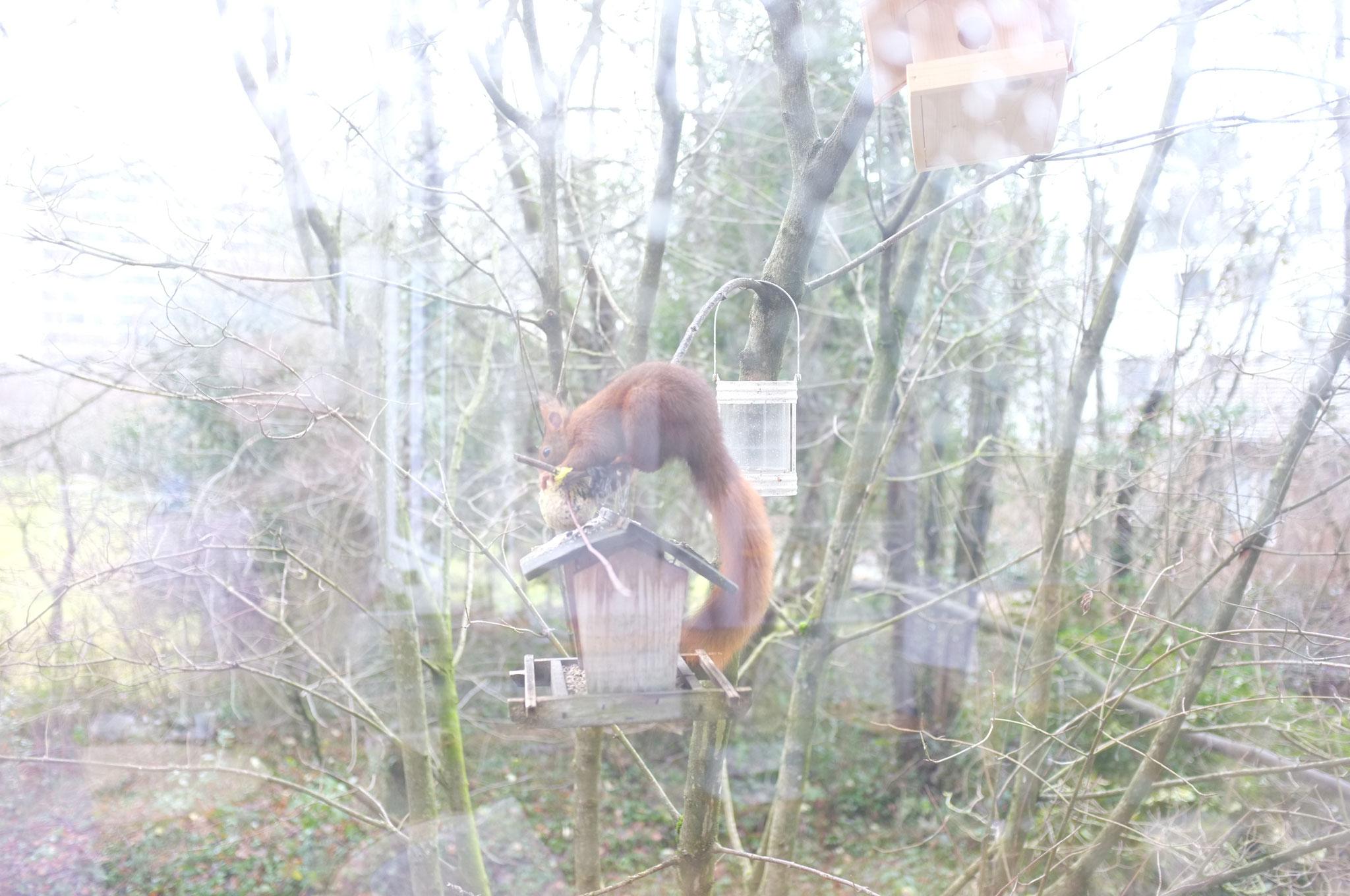 eichhörnchen am vogelhäuschen