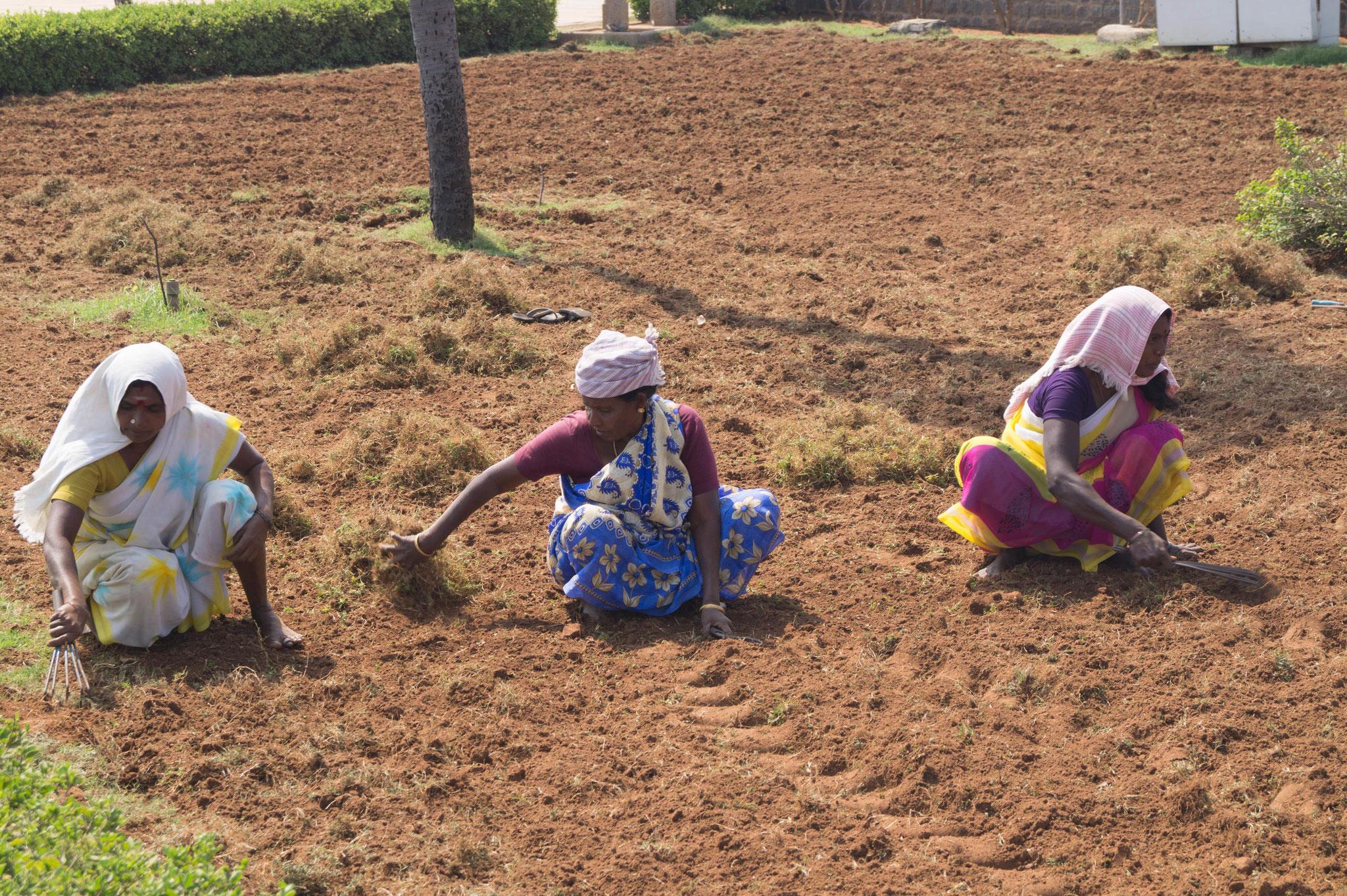 Frauen bei der Landarbeit. Foto: Johannes Wildner