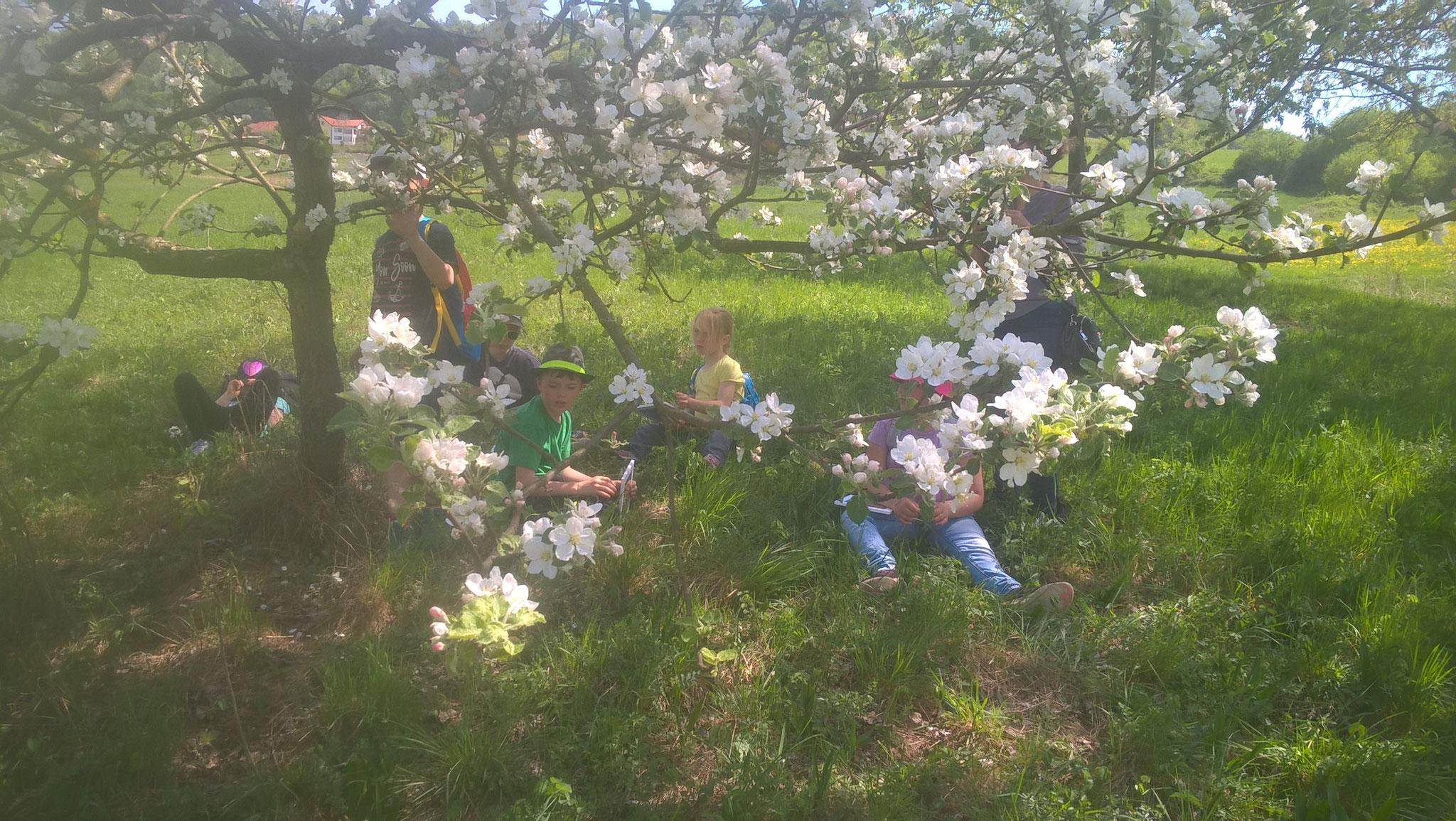 Rast unterm Apfelbaum. Foto: R. Nagel-Kroll
