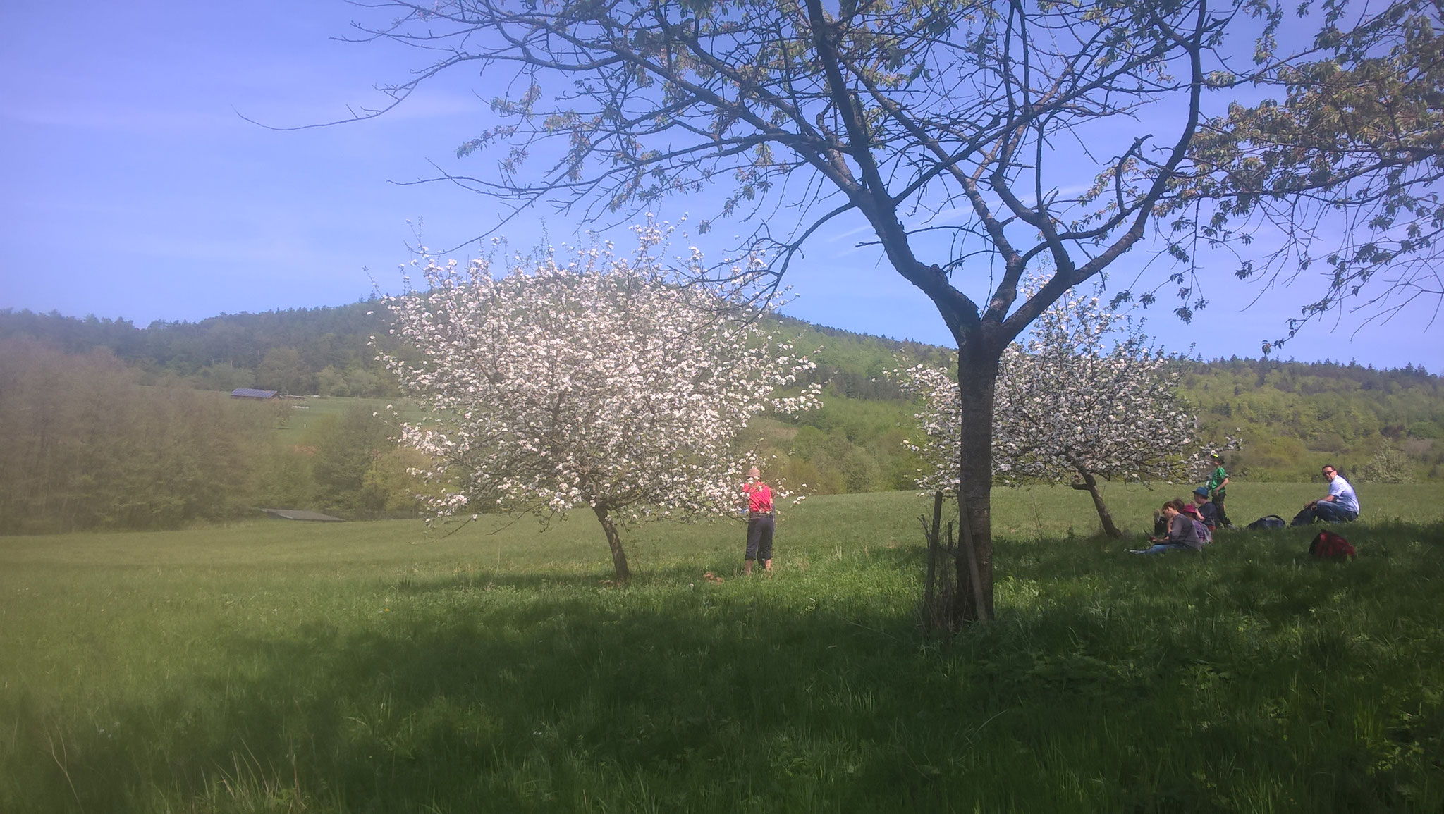 Blühende Apfelbäume. Foto: R. Nagel-Kroll