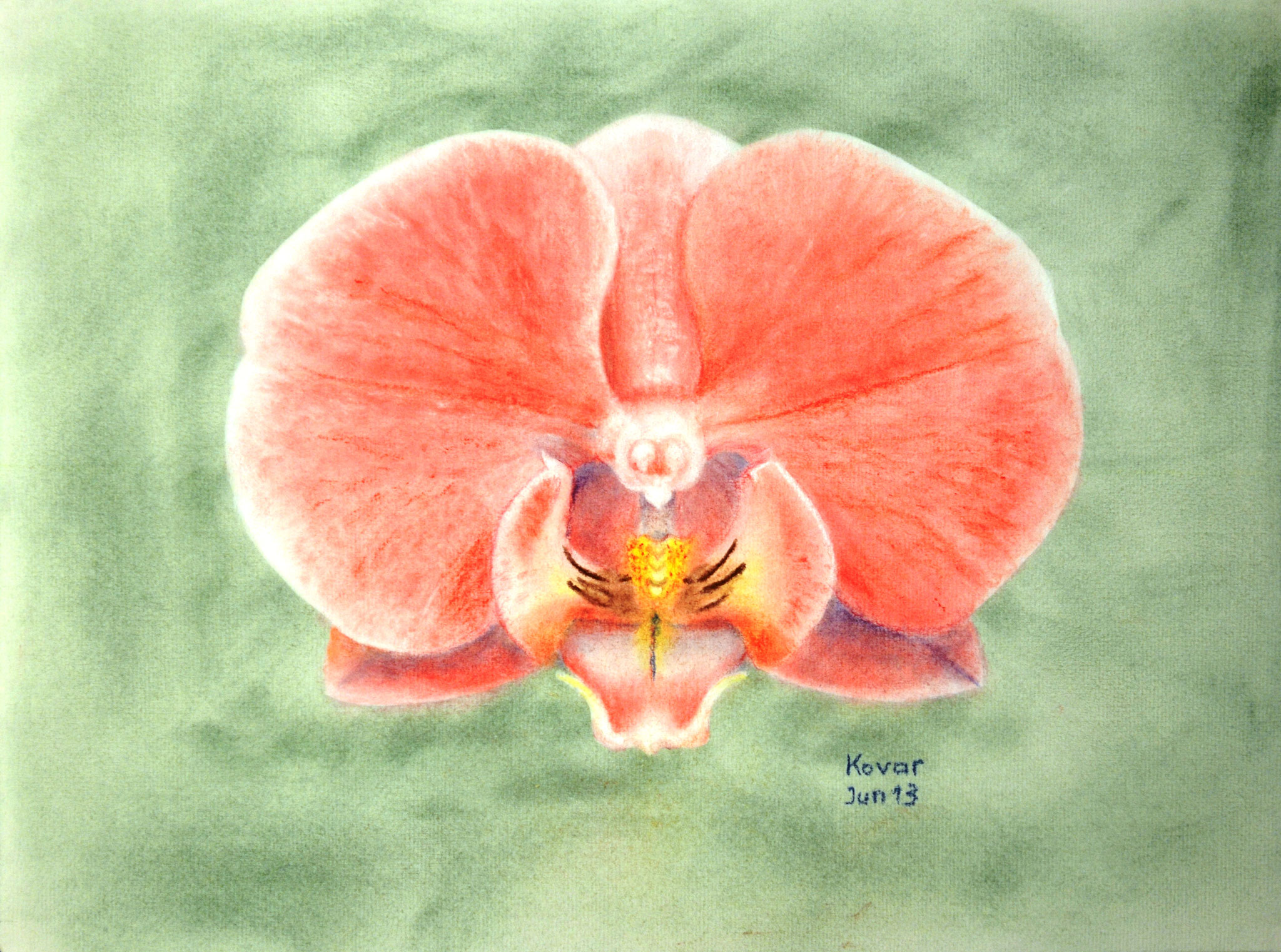Orchidee rot, Pastell, 40x30cm.