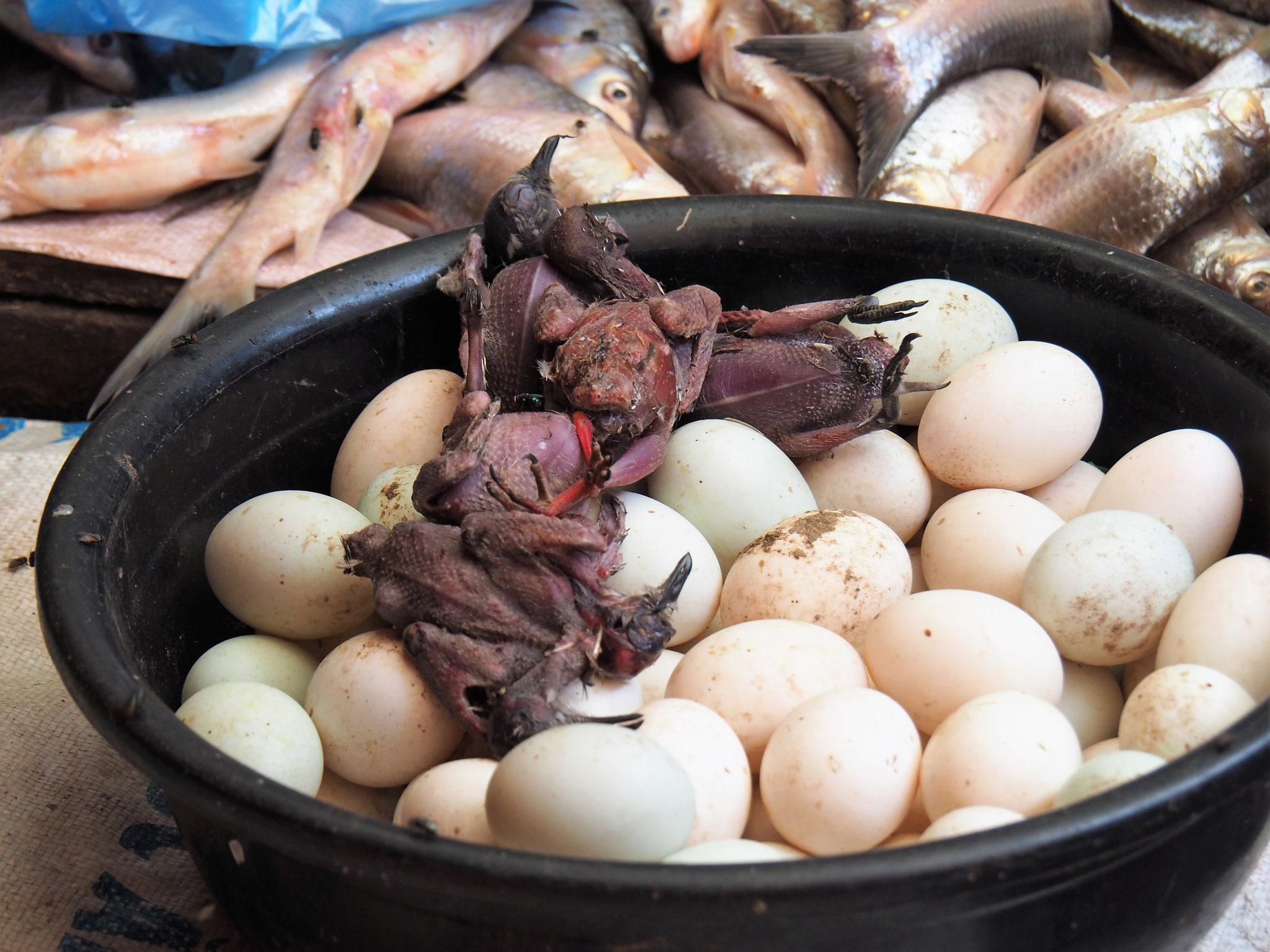 Entenküken - Baby duck eggs