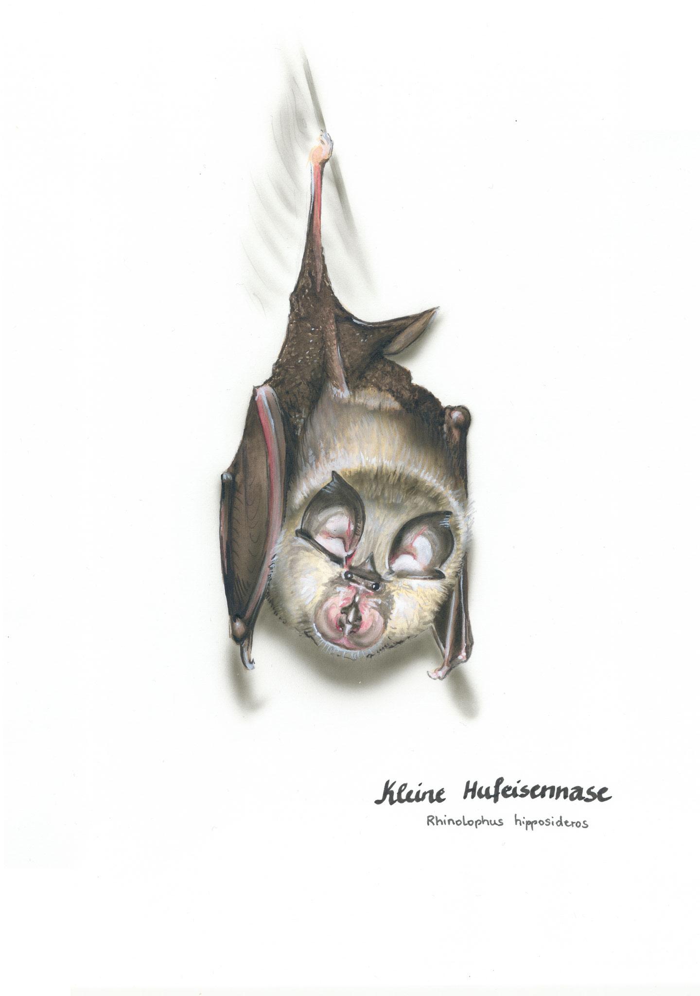 Nelumboart/Stefanie Gendera