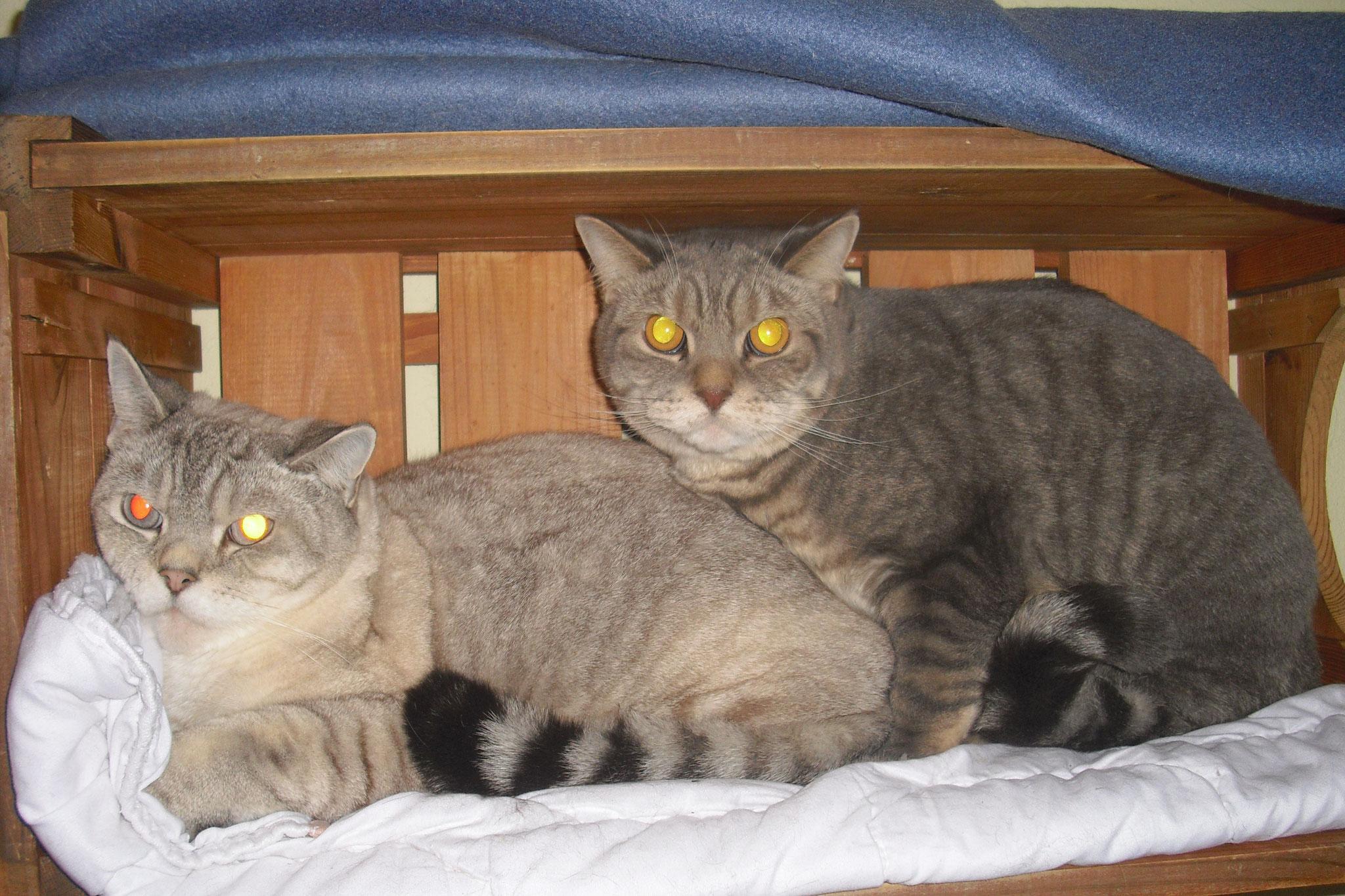 Flocke und Holly - noch etwas ängstlich, aber lieb