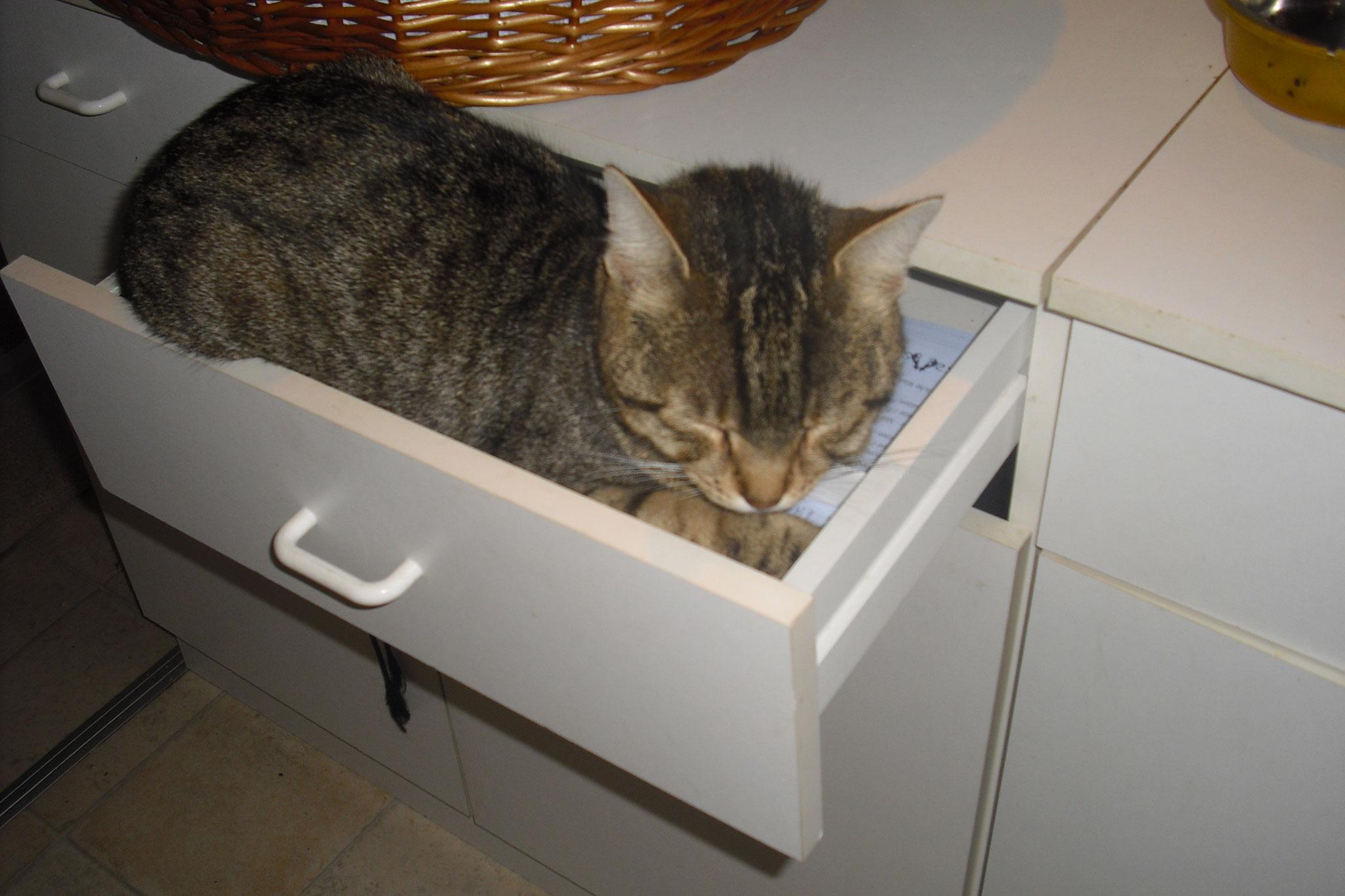 Fritzi hat es sich in der Schublade gemütlich gemacht