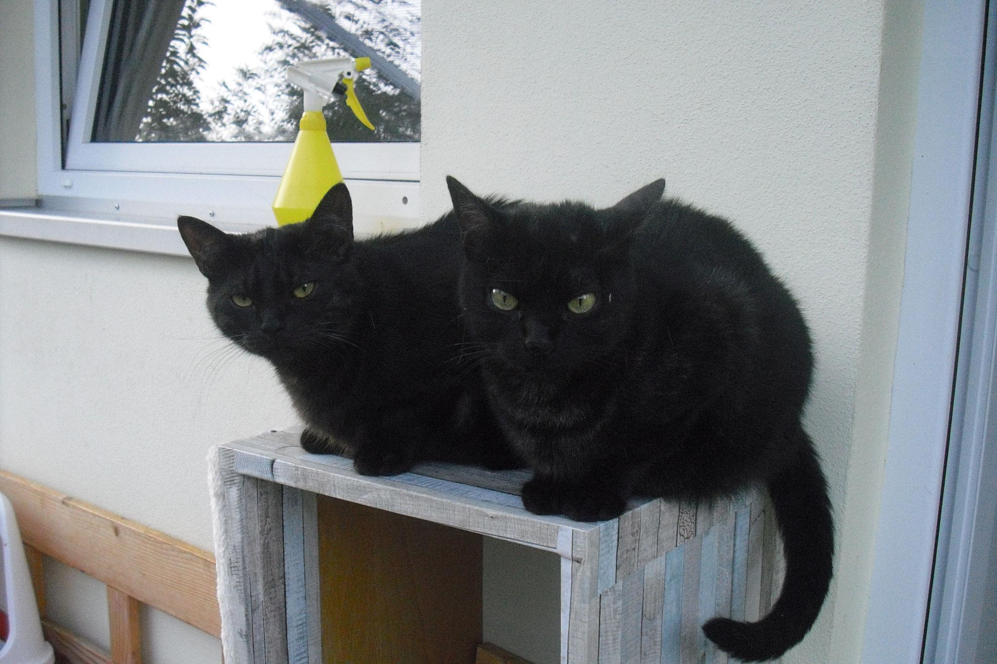 Donna und Ronja -unzertrennlich