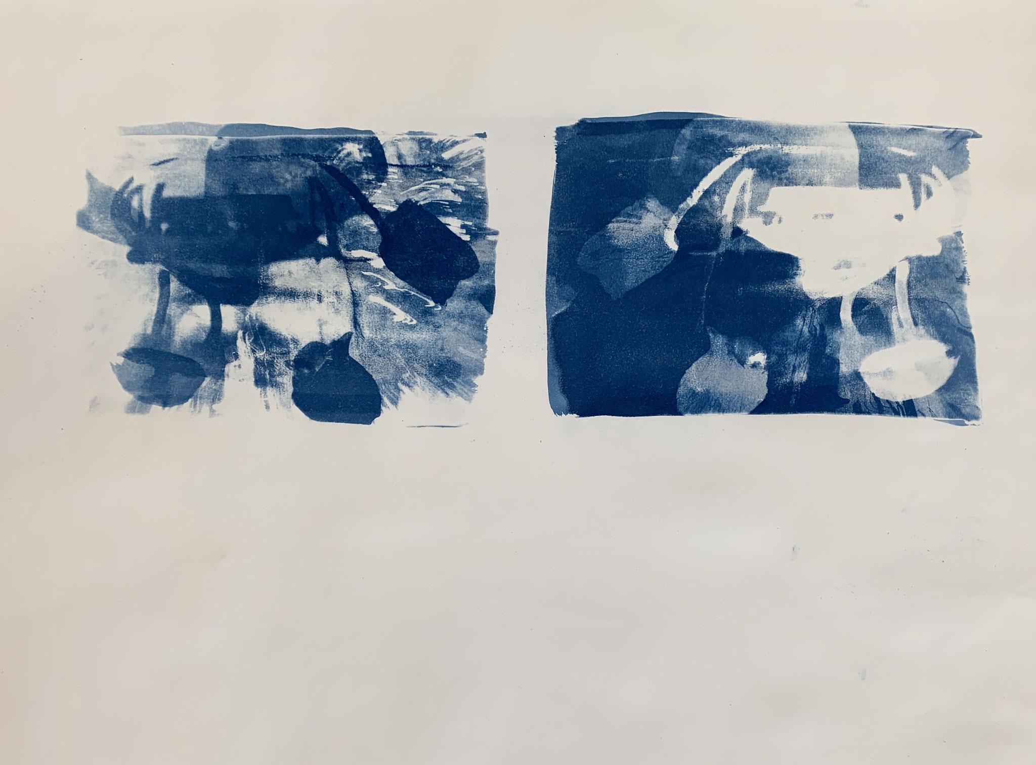Tulpinen, Cyanotypie, 50 x 70 cm,  2020