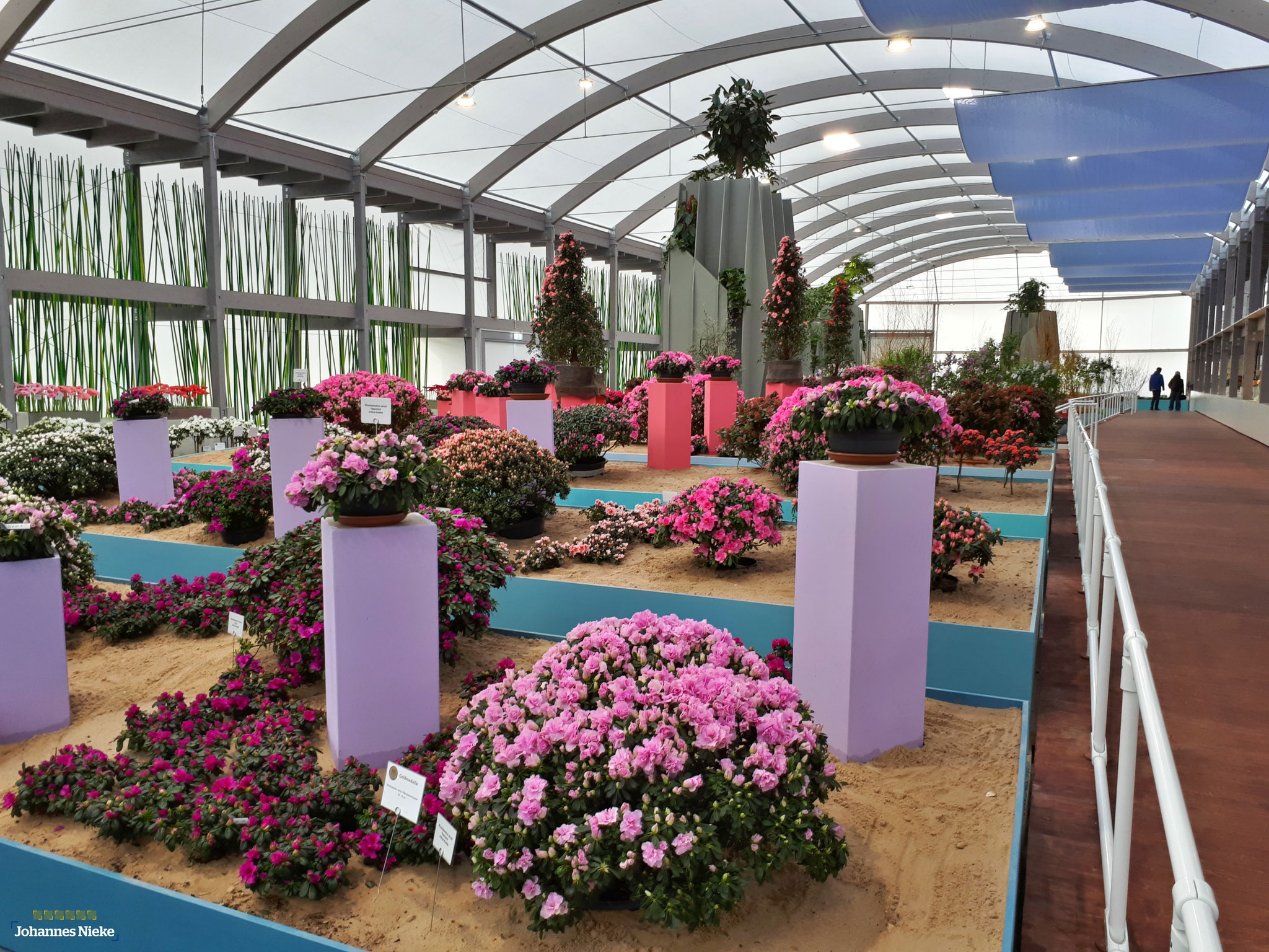"""Blumenhalle (Woche 1) """"Aufbruch ins Meer der Farben"""" & """"Blütenwolken überm Horizont"""""""